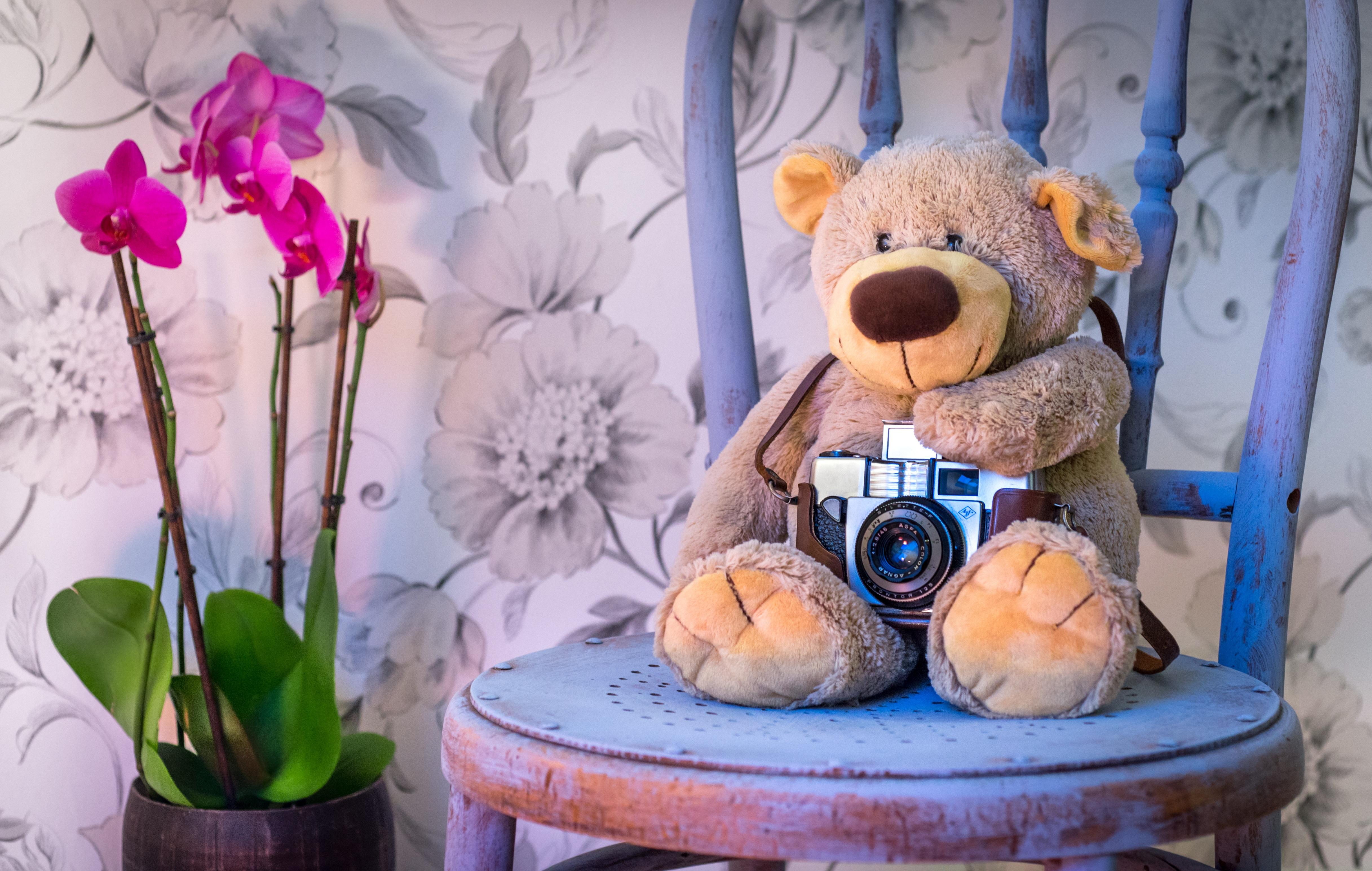 Gambar Menanam Kamera Fotografi Bunga Kursi Pedalaman Imut