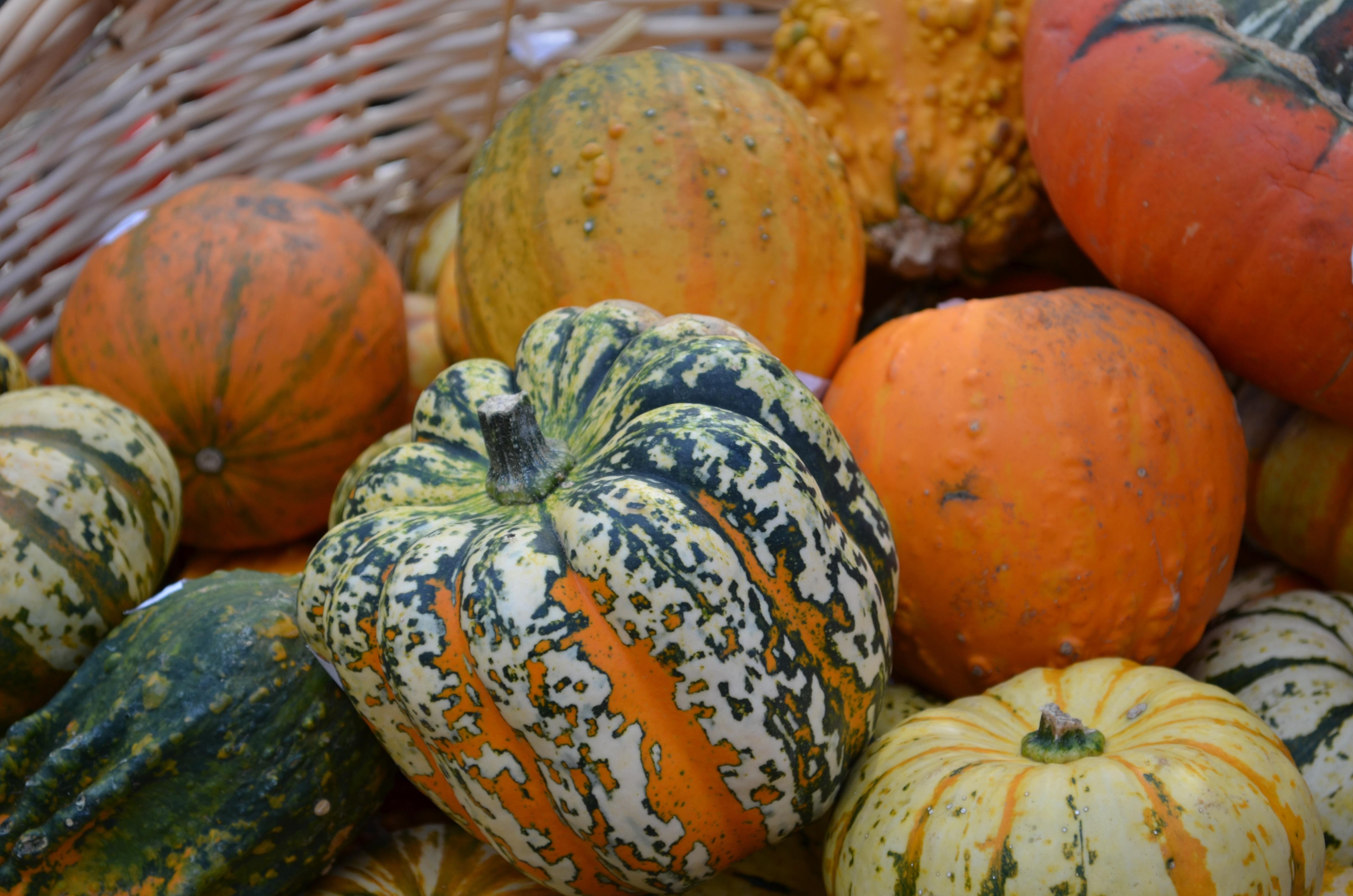 vegetales vegetariano calabaza tallado diciembre noviembre octubre vitaminas comestible calabazas cucurbita hola hokkaido decoracin