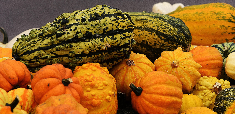 free images orange food harvest produce vegetable color