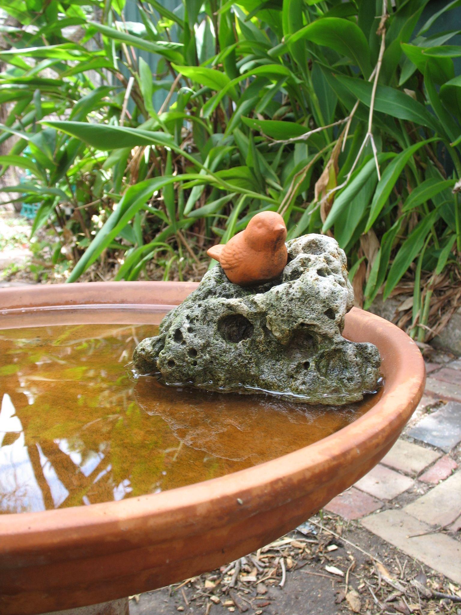 Fotos Gratis Planta Decoracion Produce Jardin Diseno - Diseo-de-fuentes-de-agua