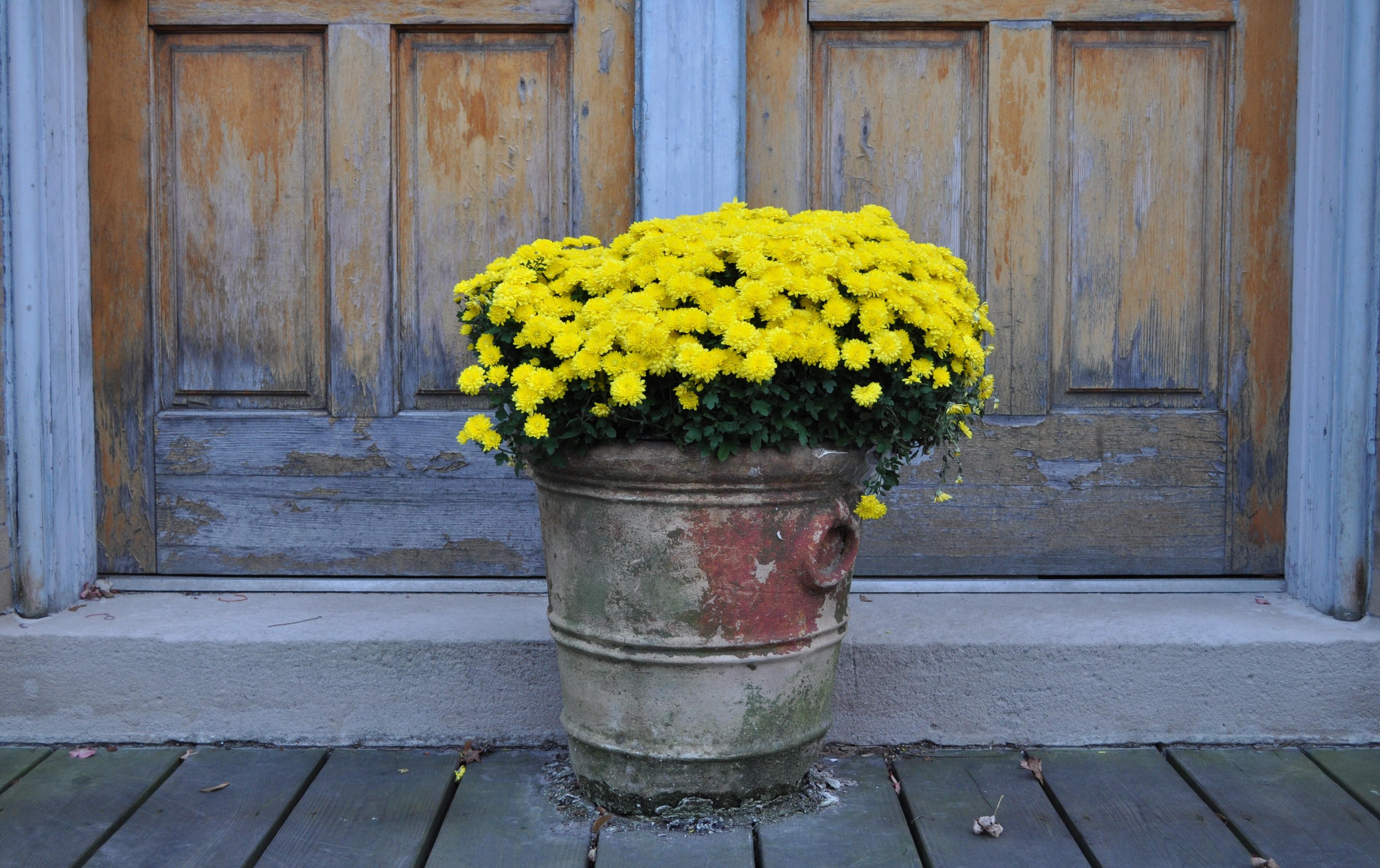 Images Gratuites : tomber, vert, l\'automne, jaune, jardin, pot de ...