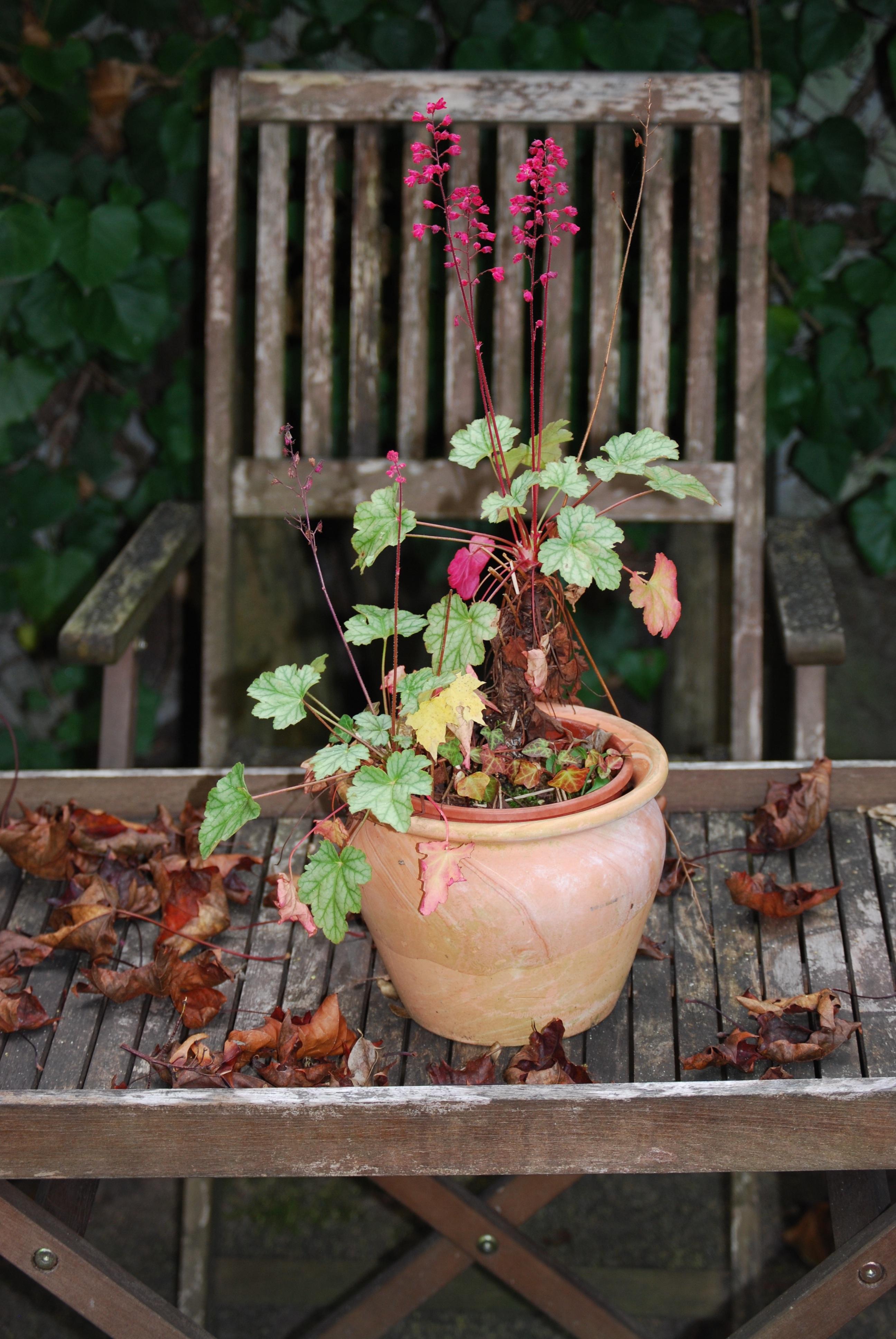 menanam jatuh bunga pot taman halaman belakang botani taman masih hidup tanaman bunga bunga