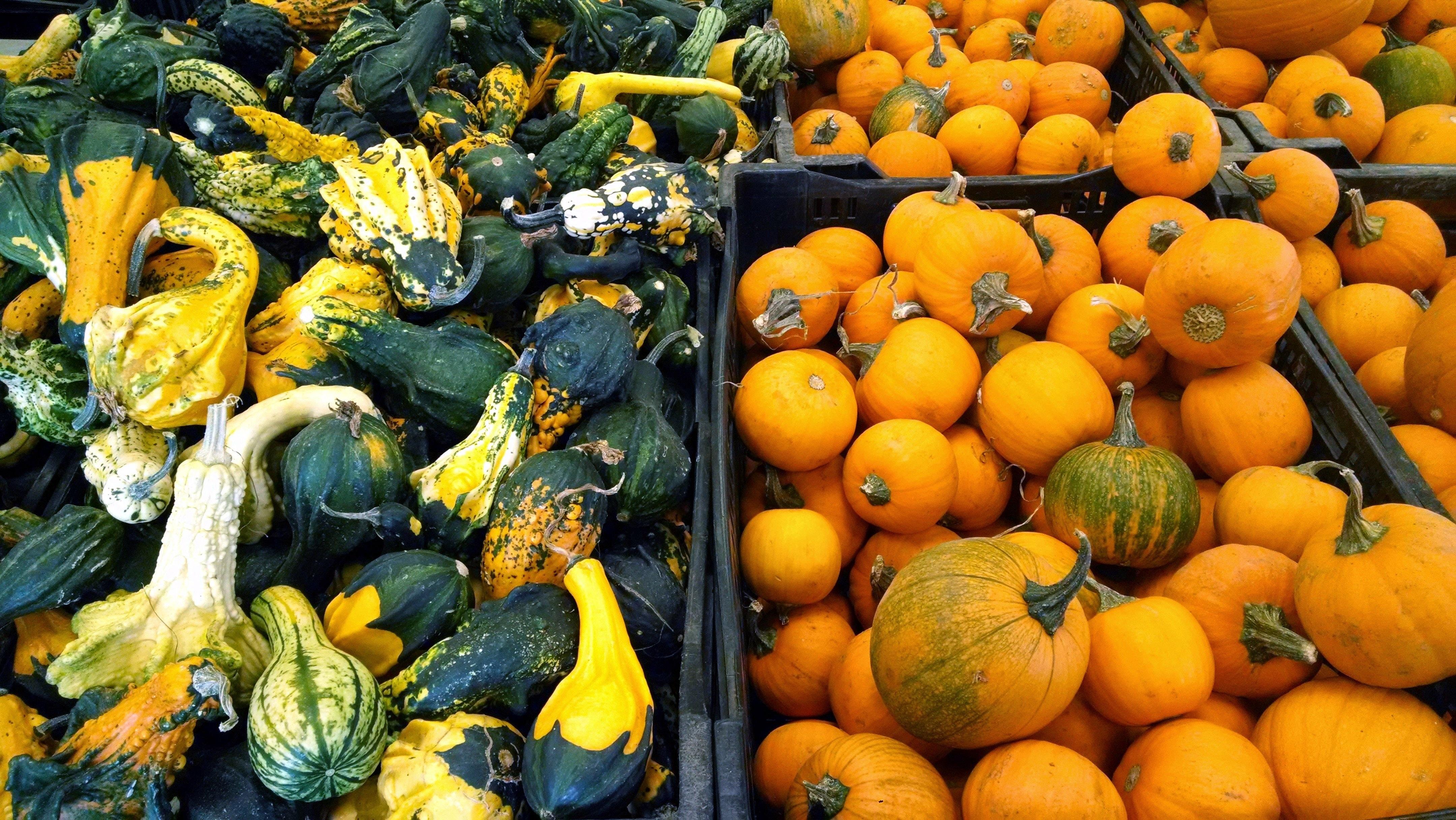 free images farm fruit fall celebration decoration orange