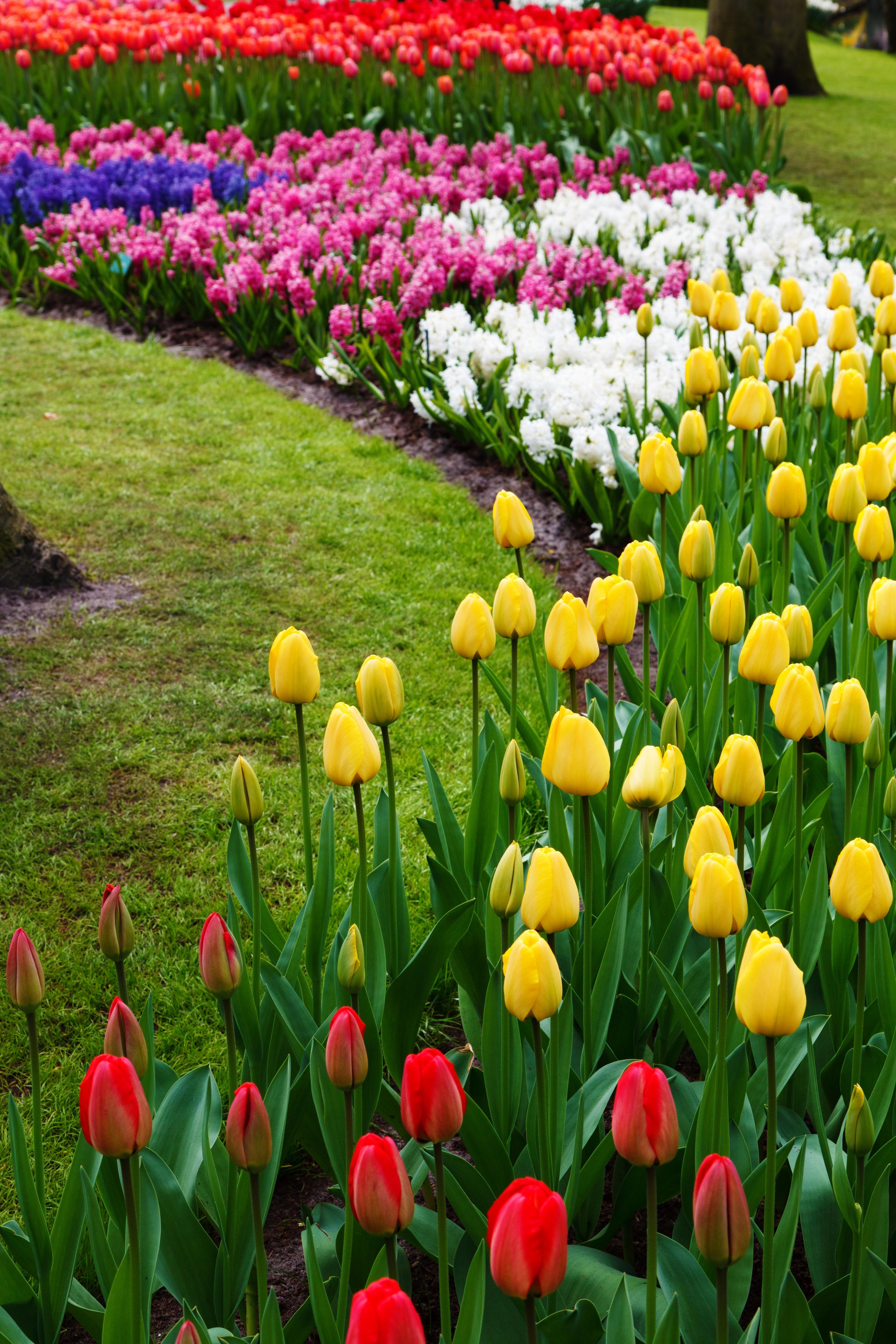 картинки с тюльпанами и весной малышке дэннилин взял