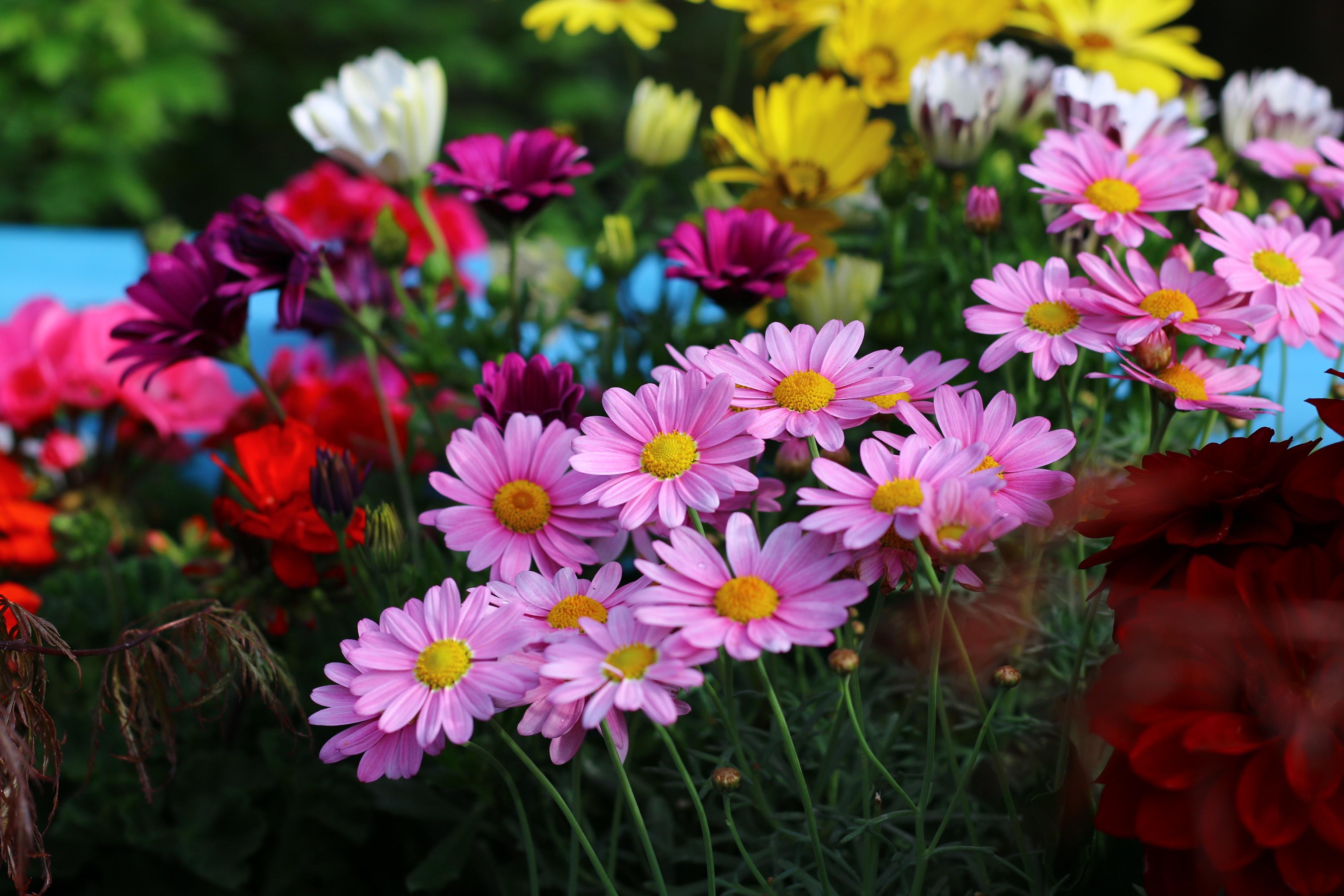 фото всех поздних цветов интенсивности окраски исследуемой