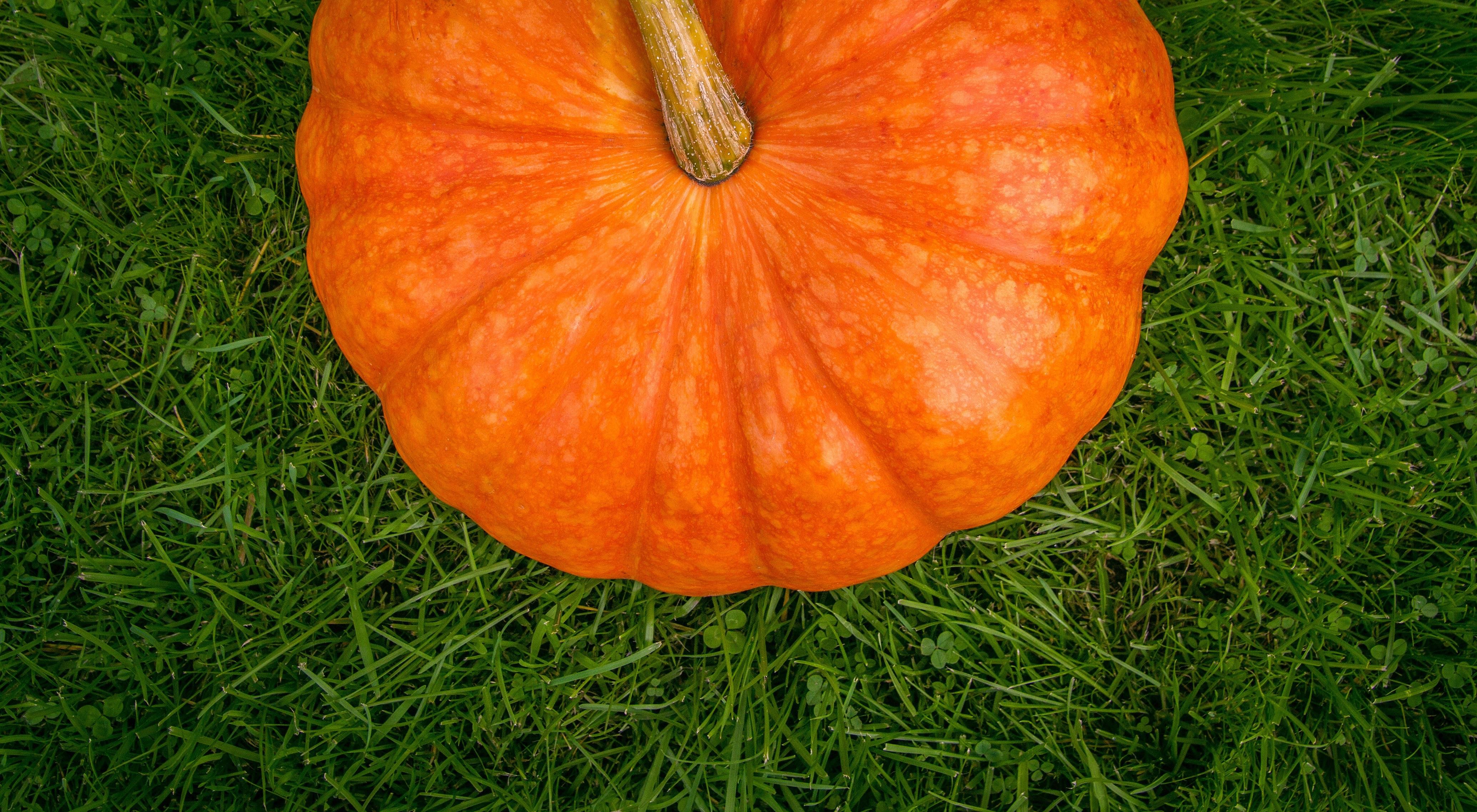 images gratuites champ feuille fleur orange aliments produire l gume l 39 automne. Black Bedroom Furniture Sets. Home Design Ideas