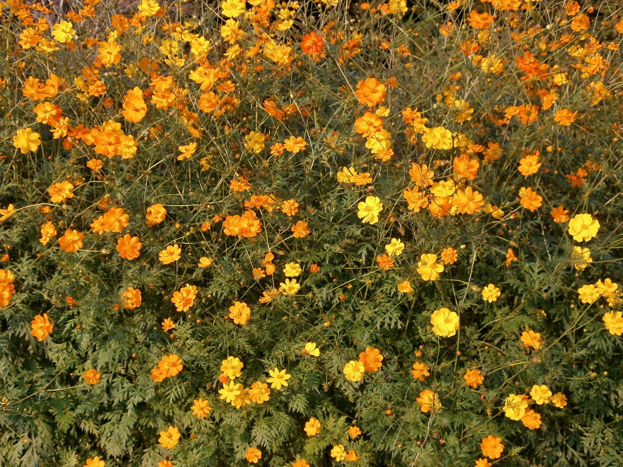 Free Images Field Meadow Flower Herb Botany Flora Wildflower