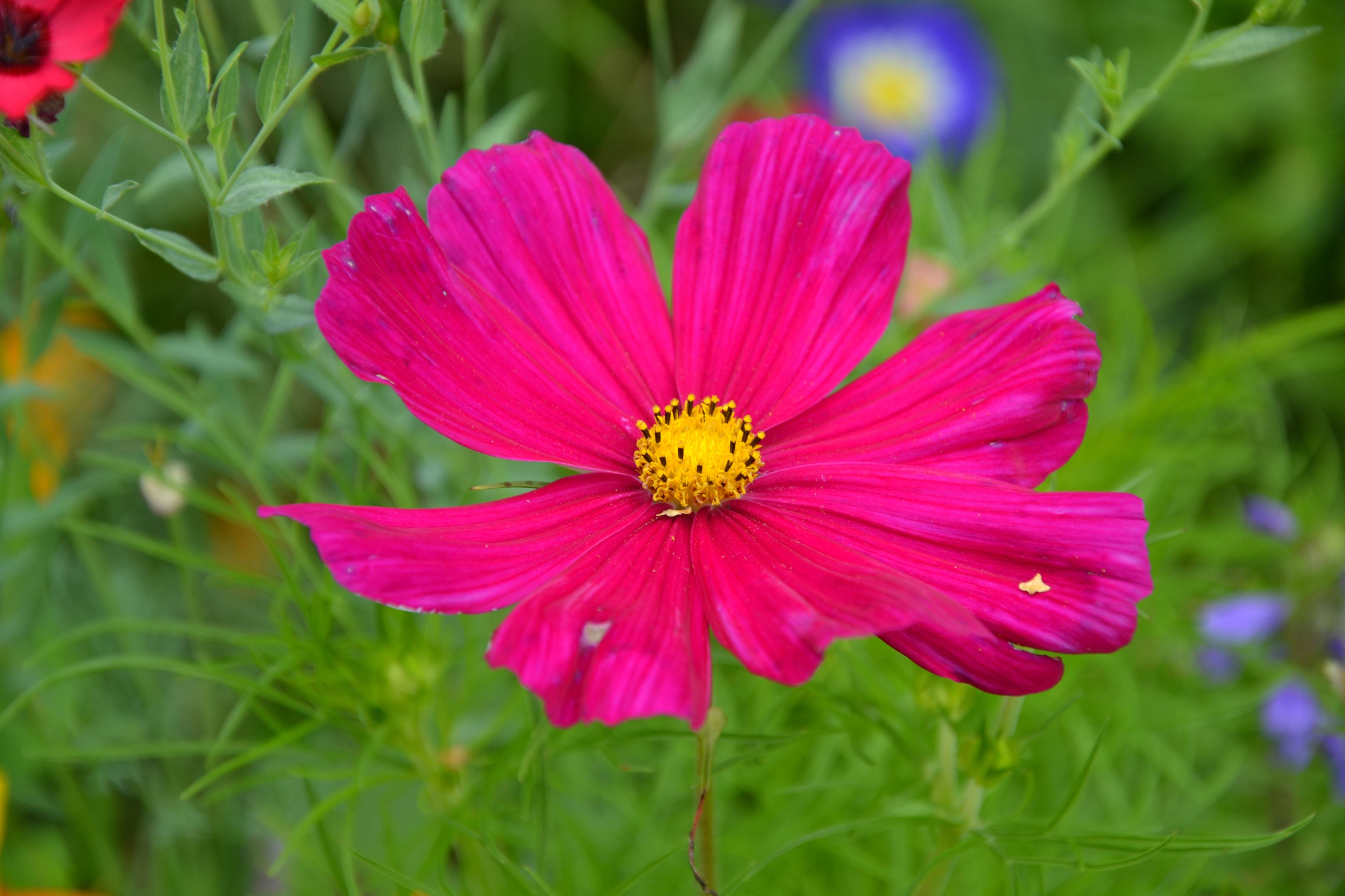 Immagini belle fiore petalo estate colore botanica for Fiori stilizzati colorati