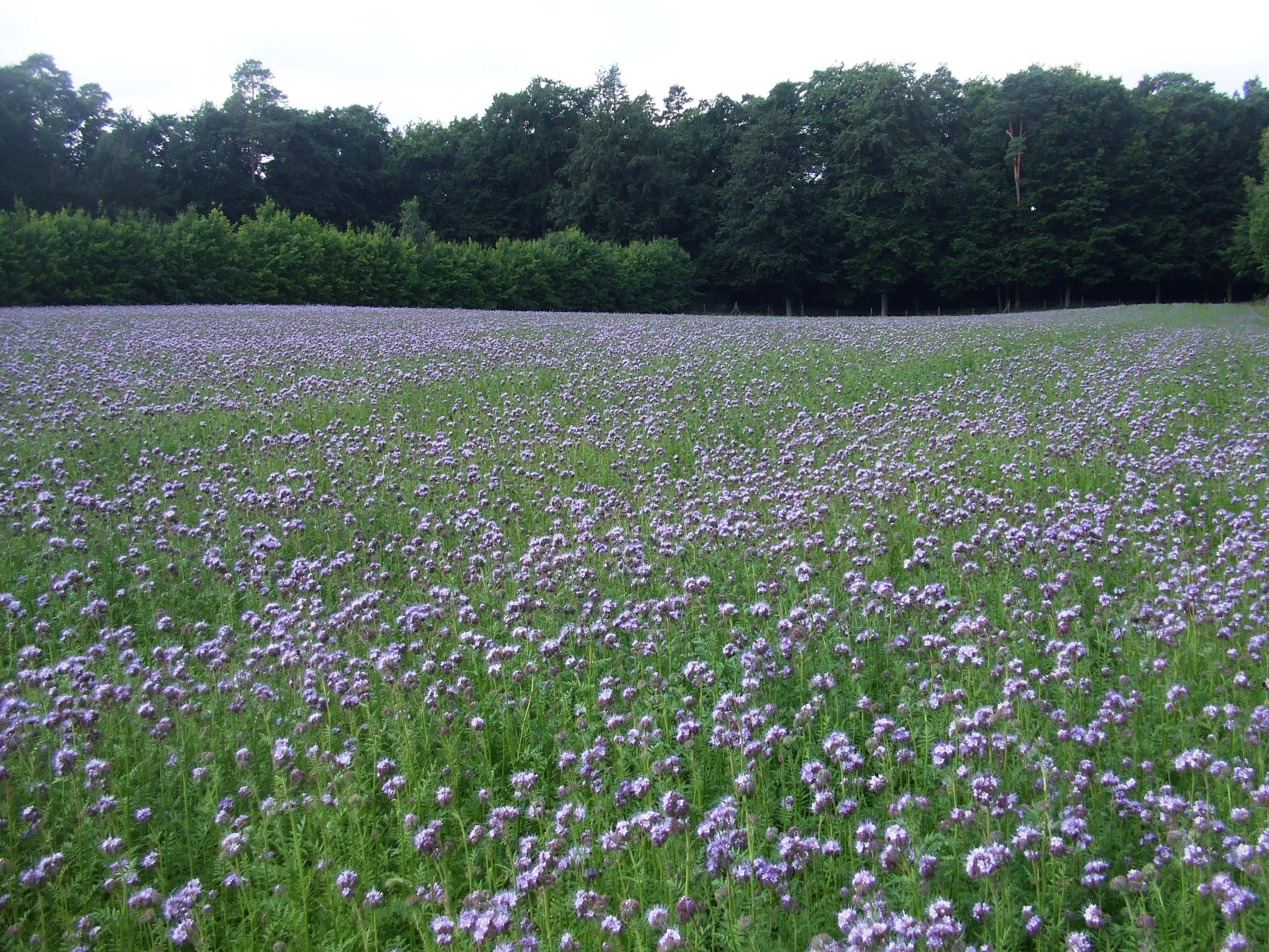 Blumenwiese Englisch kostenlose foto feld wiese prärie blume ernte weide