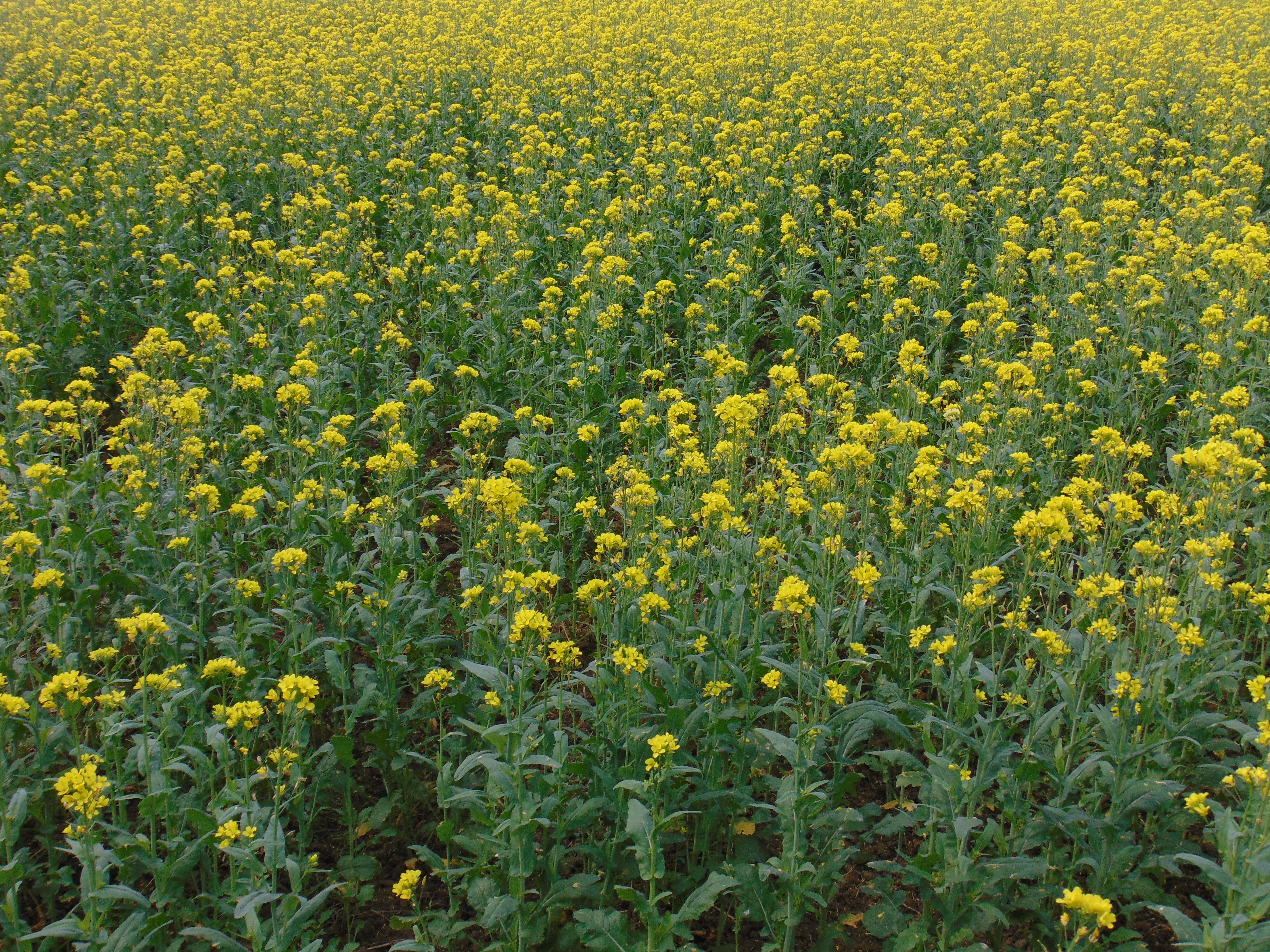 Free Images Field Meadow Prairie Flower Food Herb Produce