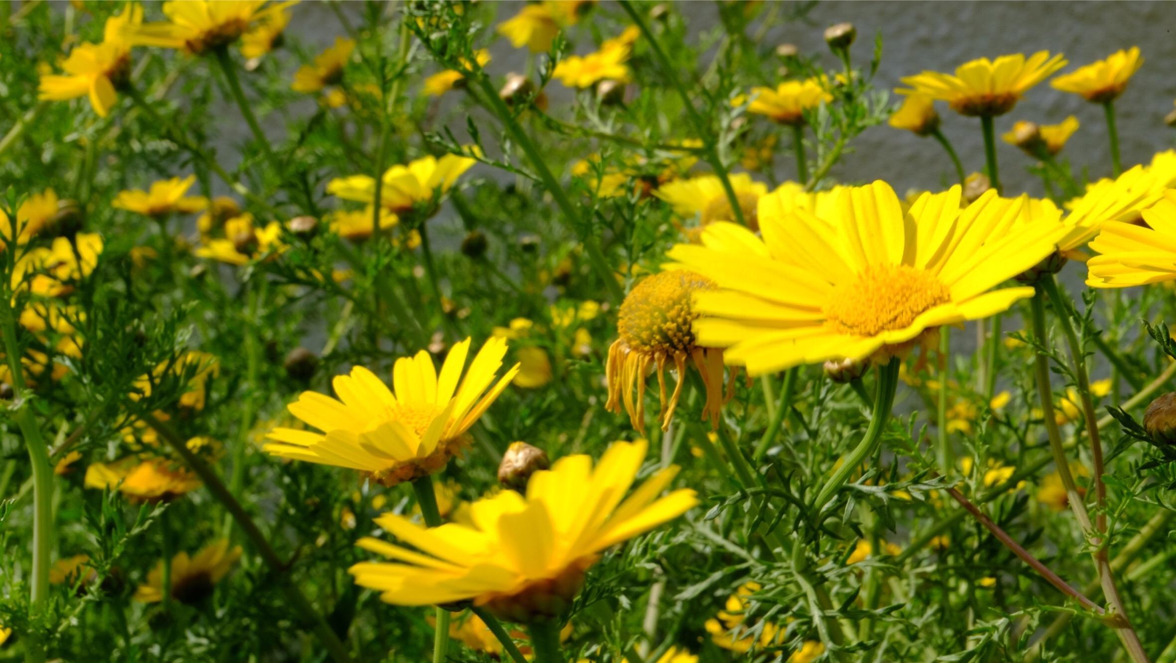 Free Images Field Meadow Prairie Flower Petal Spring Herb