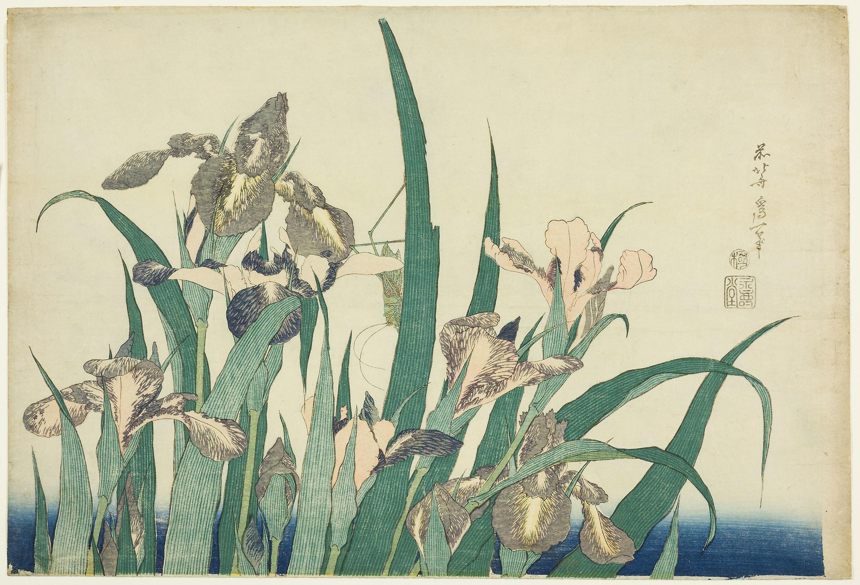 Gambar Menanam Flora Keluarga Rumput Bunga Tanaman Berbunga