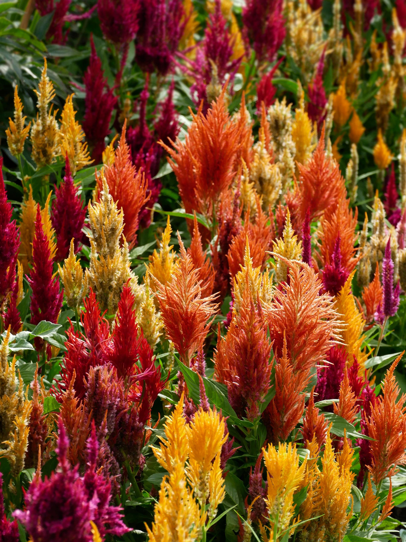 Piante e fiori autunnali for Immagini fiori autunnali