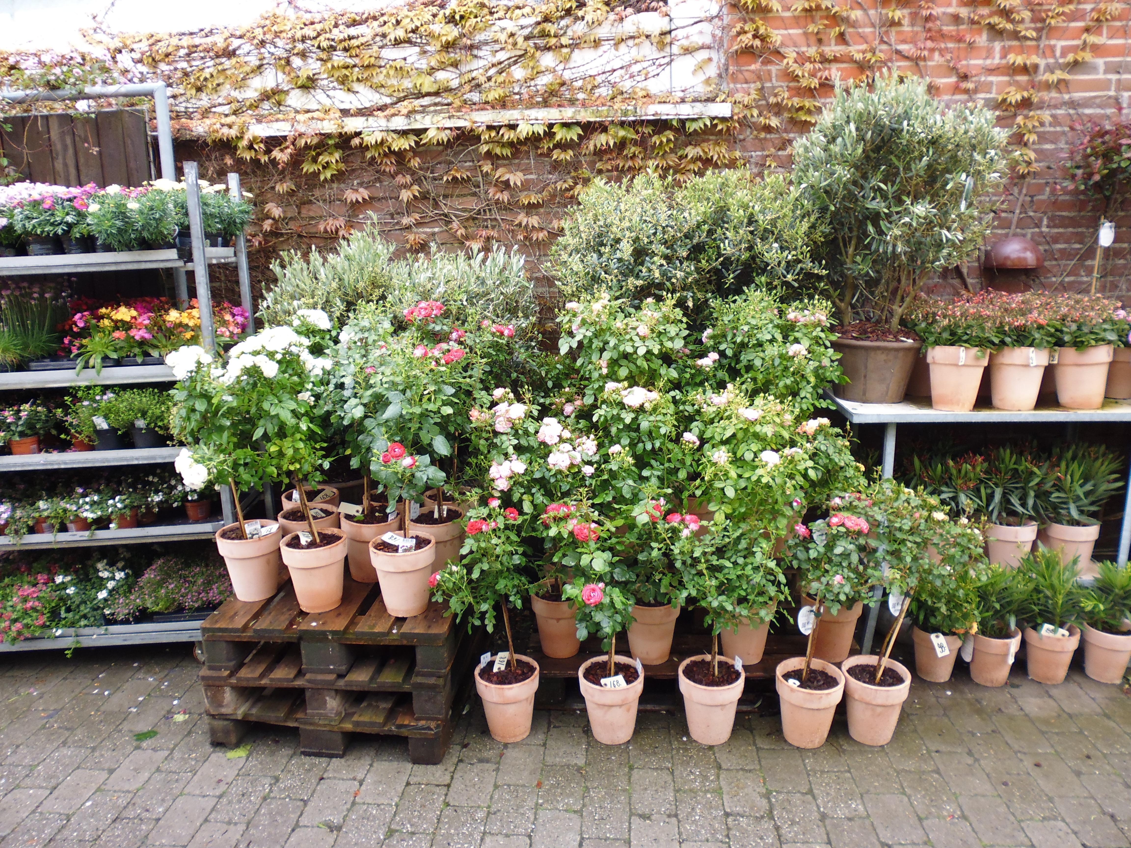 Images gratuites arri re cour botanique jardin plante for Plante arbuste