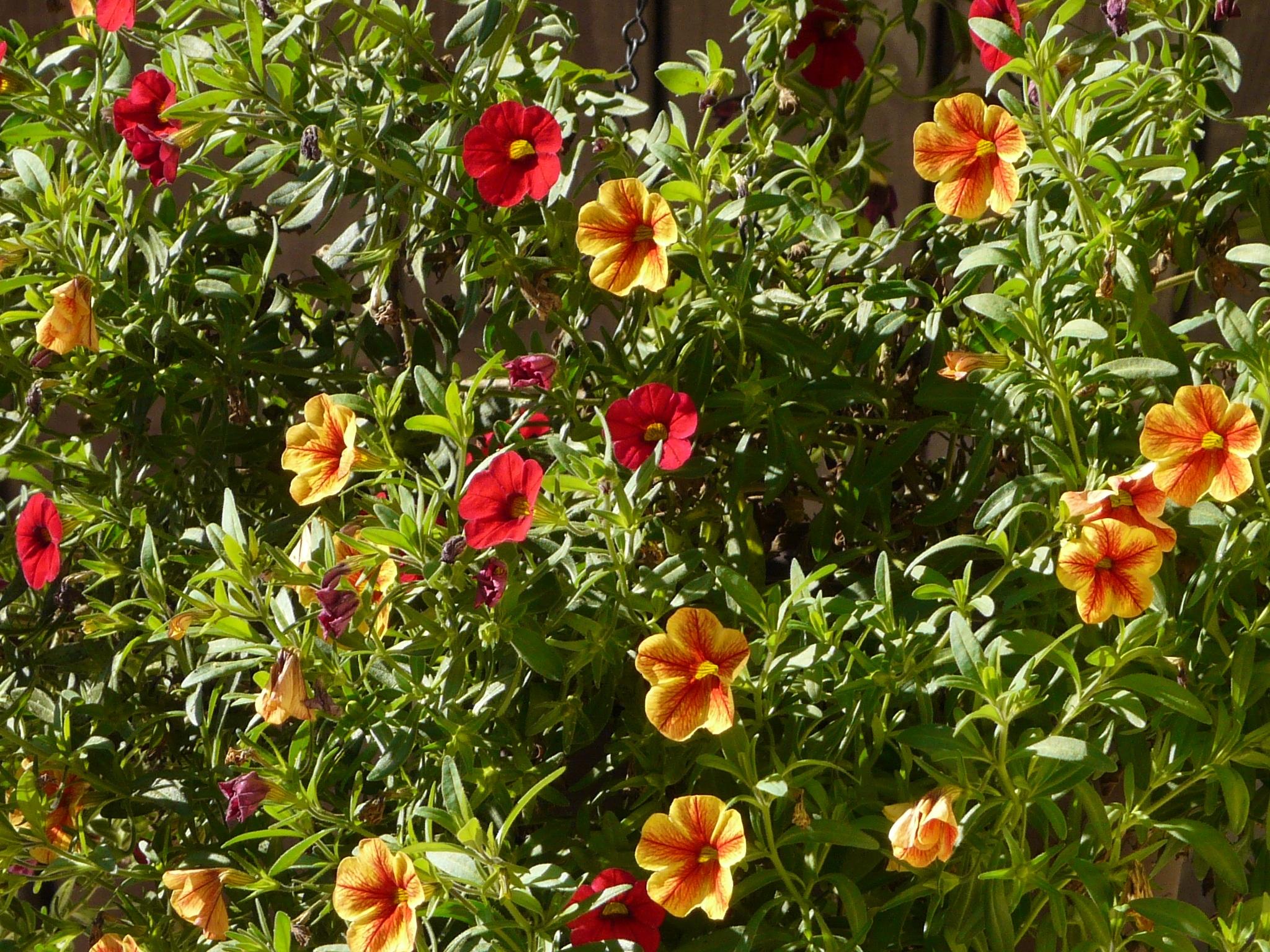 Tuinieren Op Balkon : Gratis afbeeldingen fabriek balkon plantkunde geel tuin