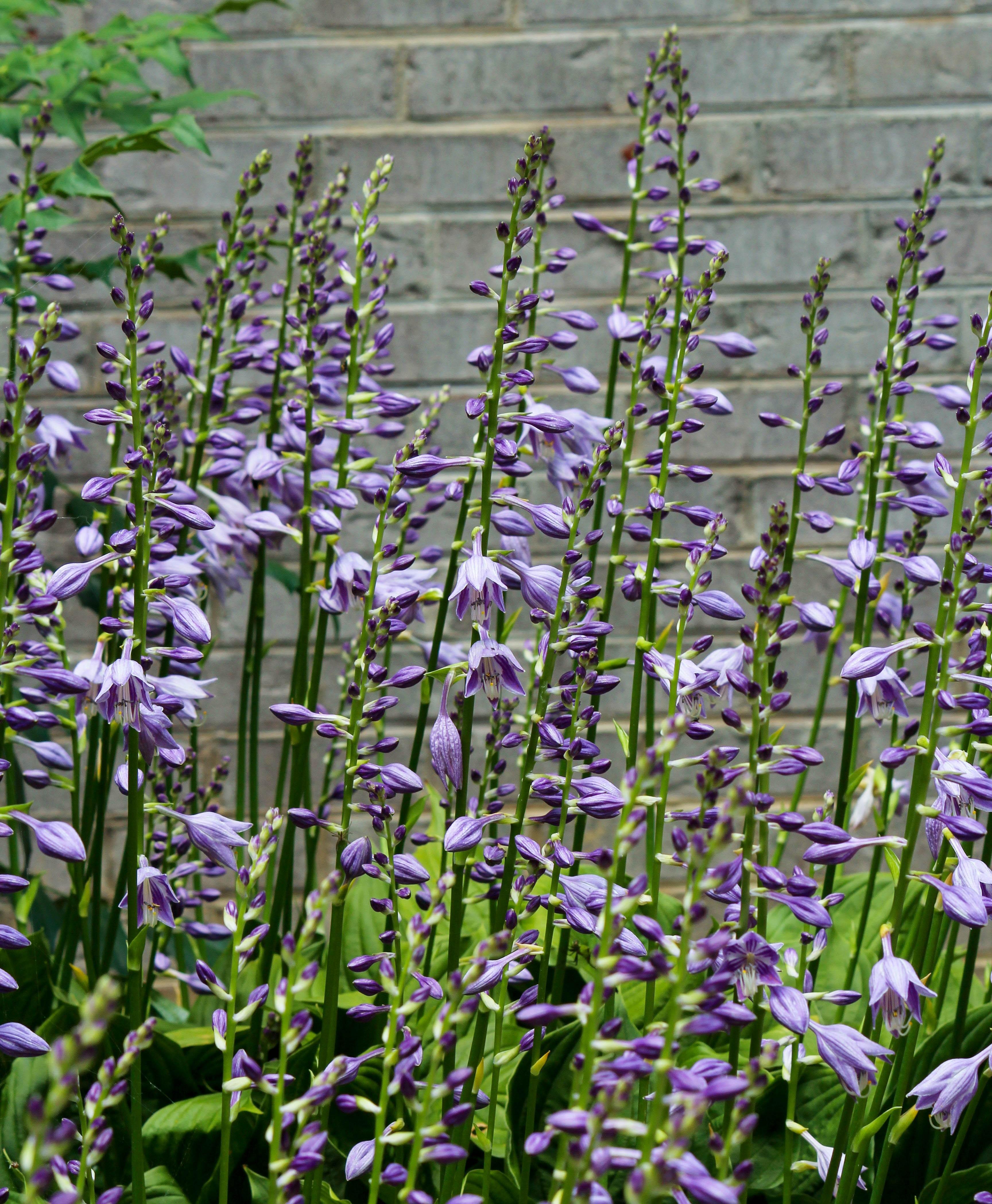 Free Images Bloom Herb Botany Blooming Garden Flora