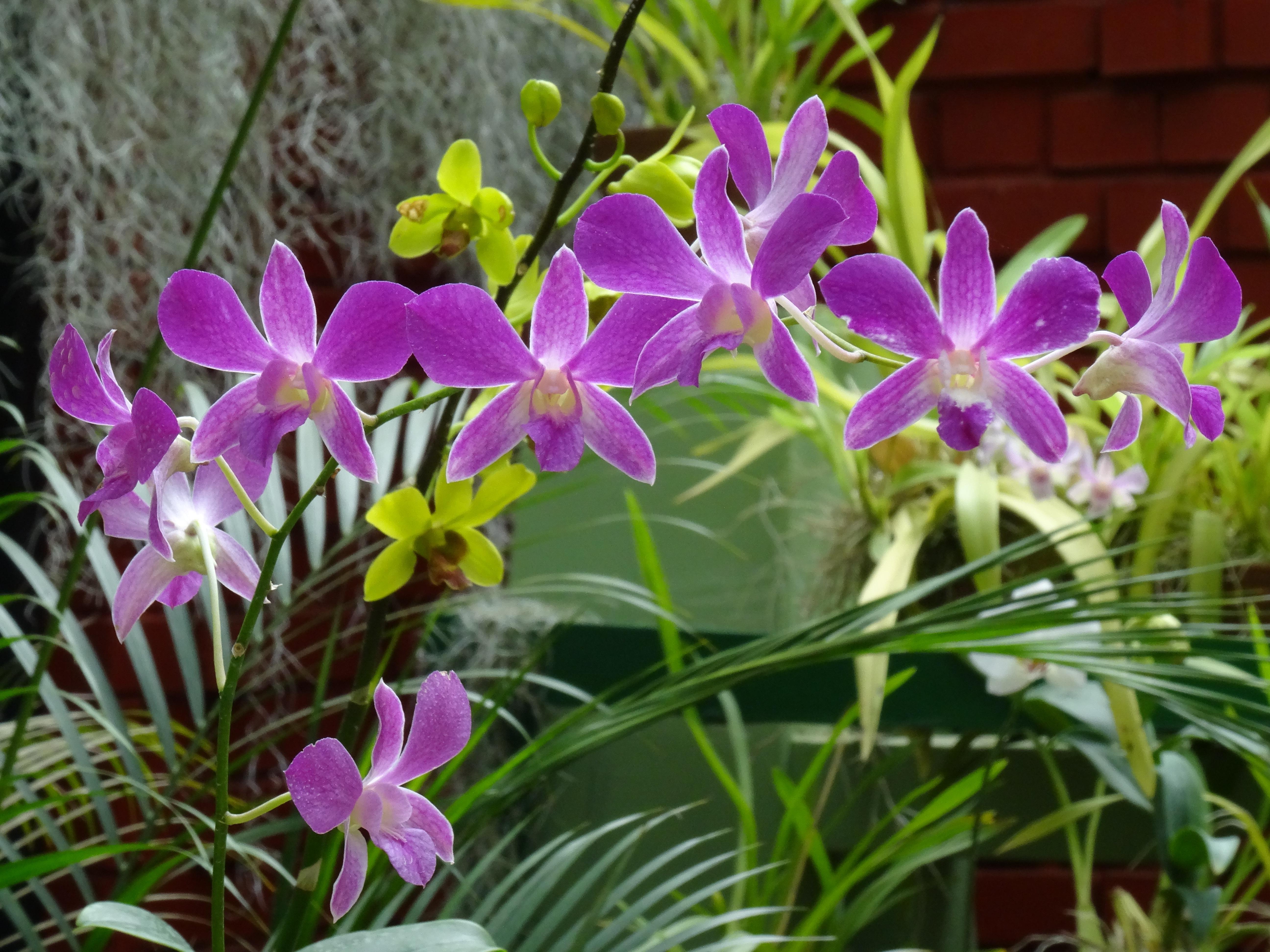 plante exotique mauve