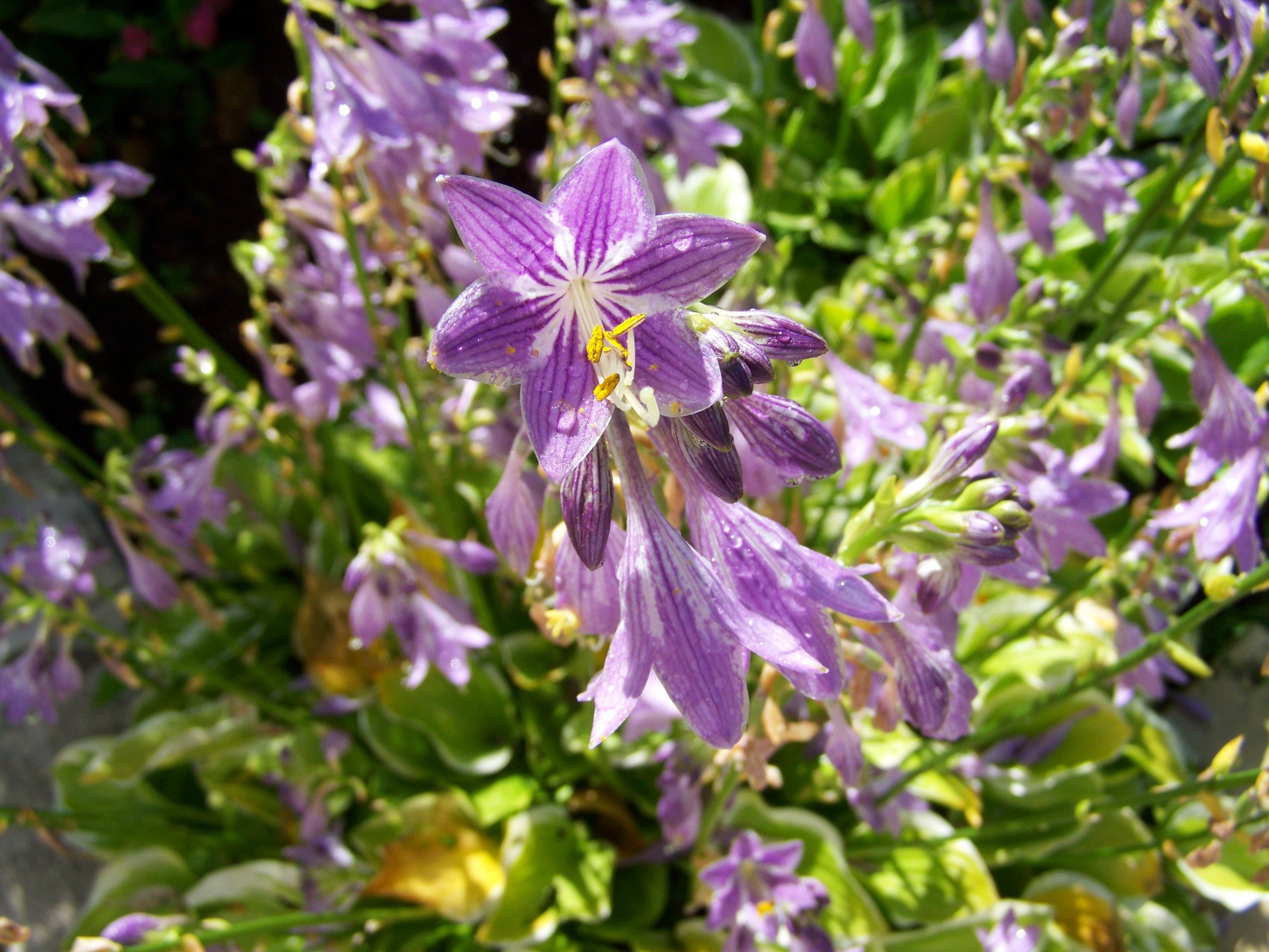 Images Gratuites : botanique, flore, Fleur sauvage, jardin de fleurs ...