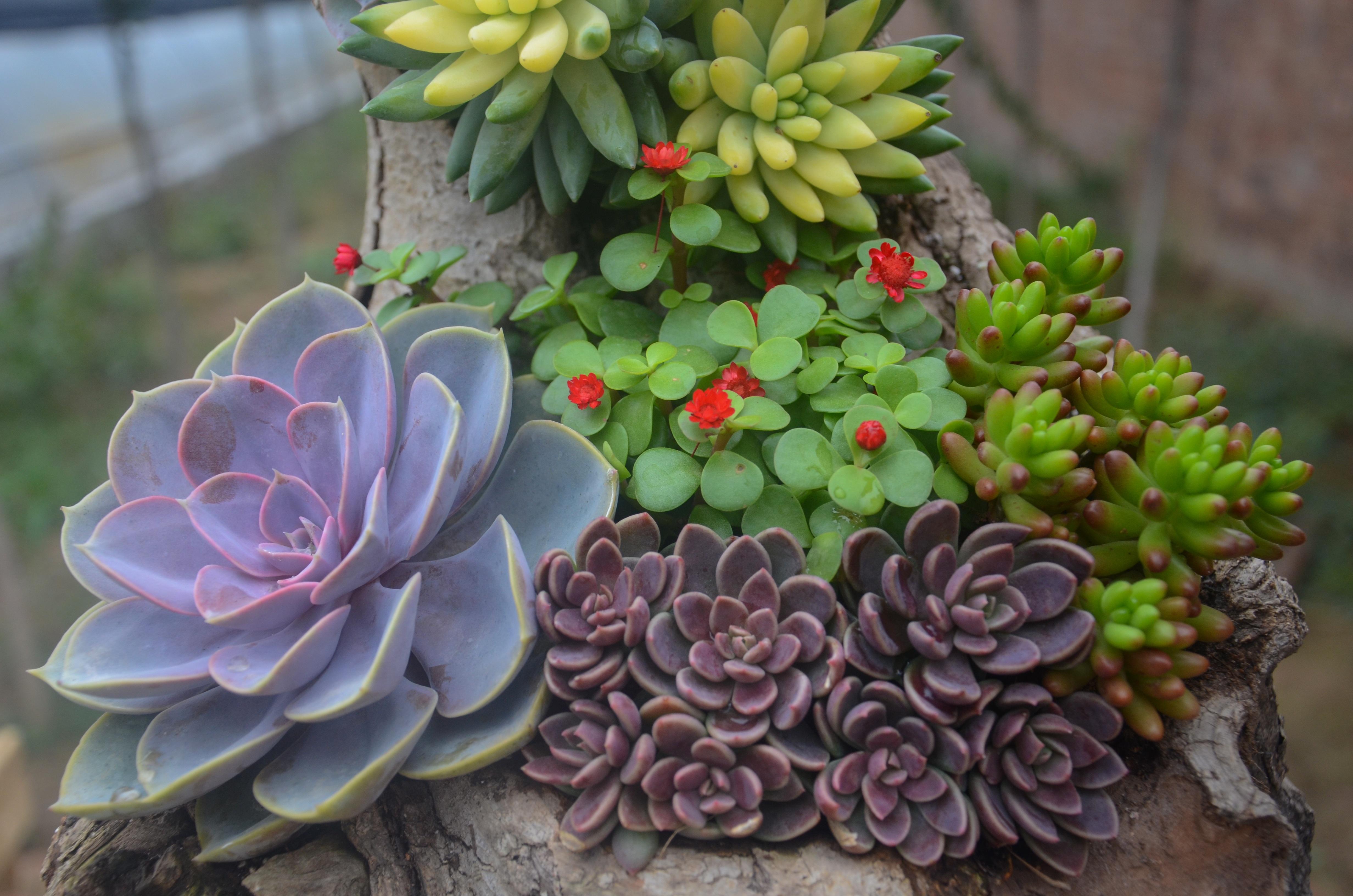 Banco de imagens plantar flor bot nica jardim flora for Plantas crasas interior