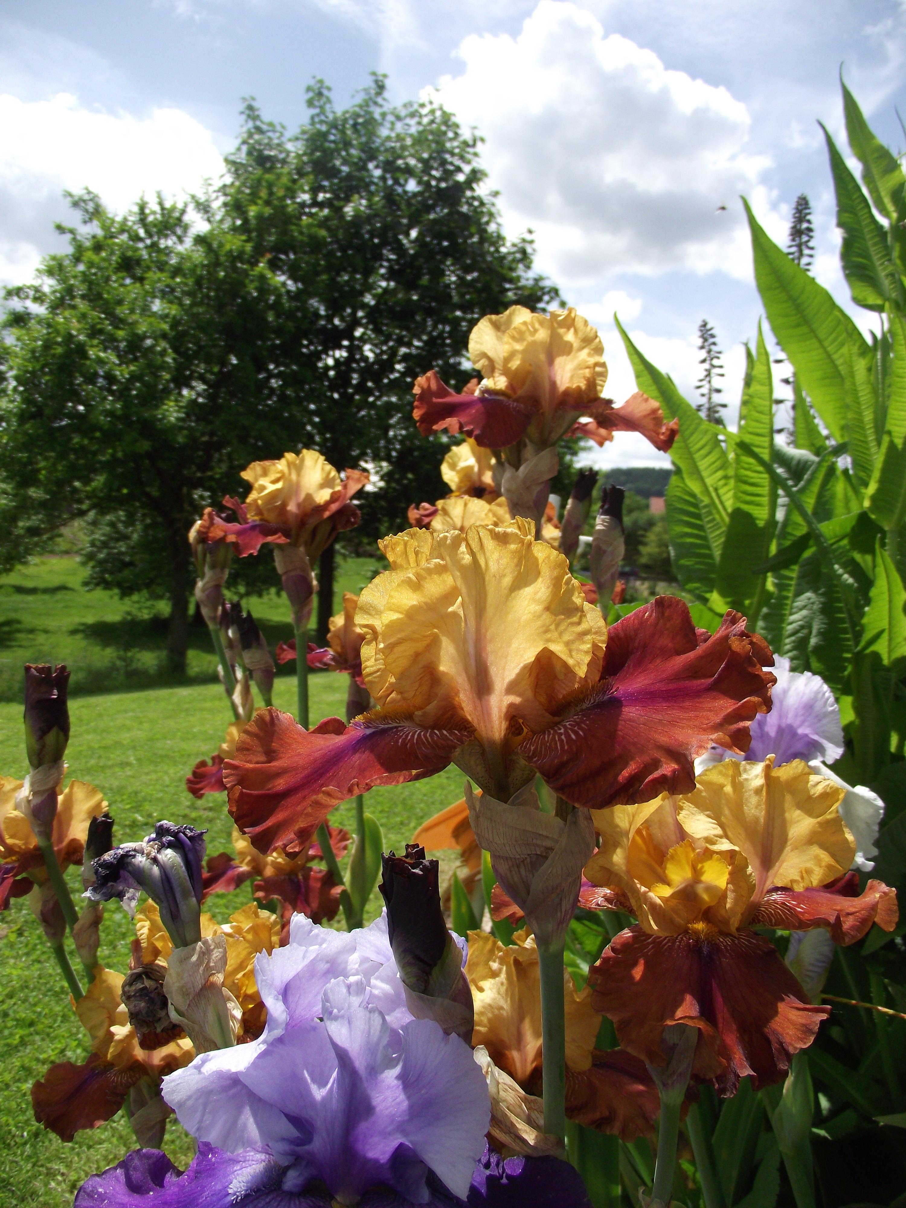 Free Images : flower, botany, garden, flora, flowers, floristry ...
