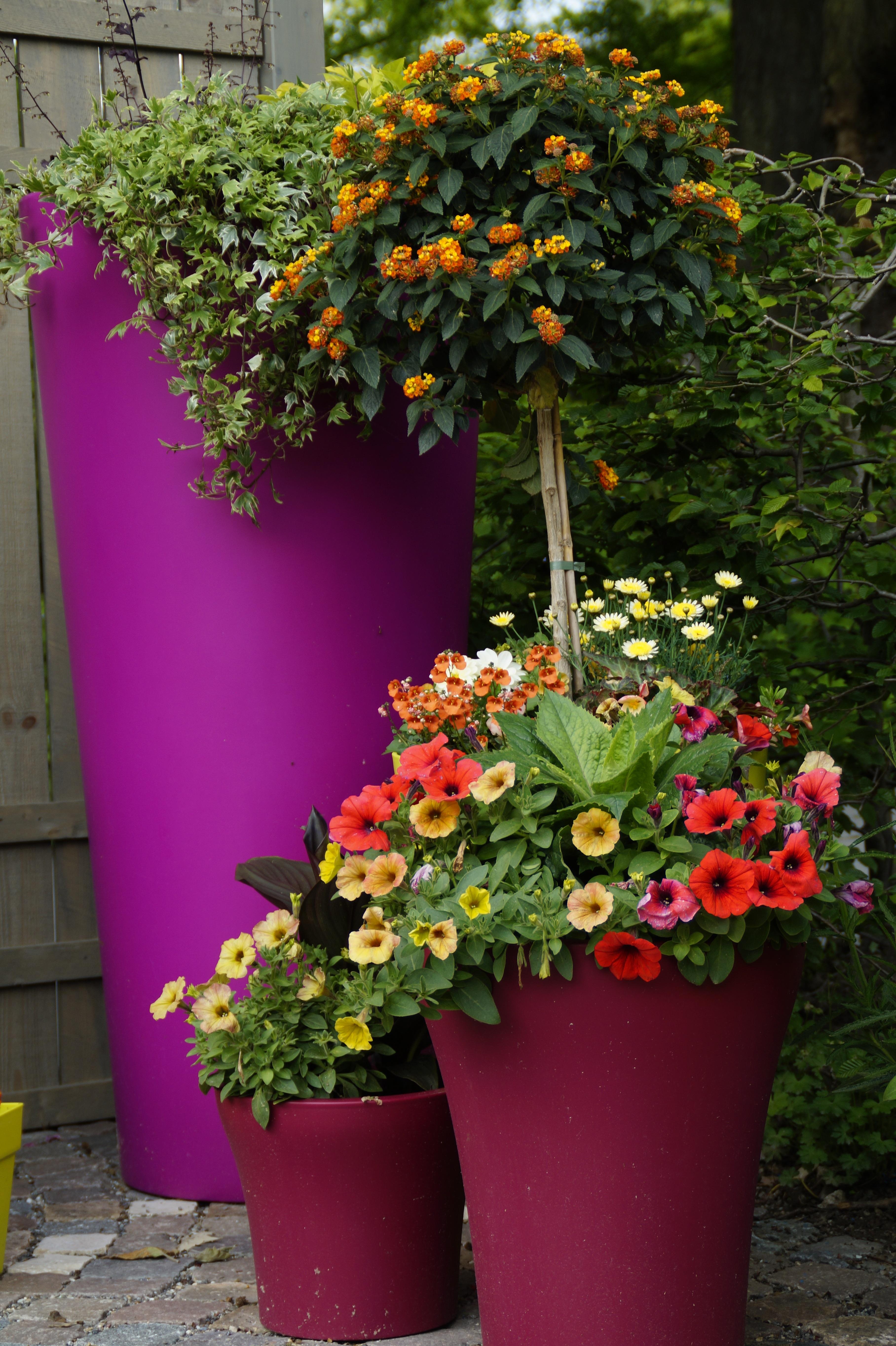 Фото красиво посаженных цветов 30
