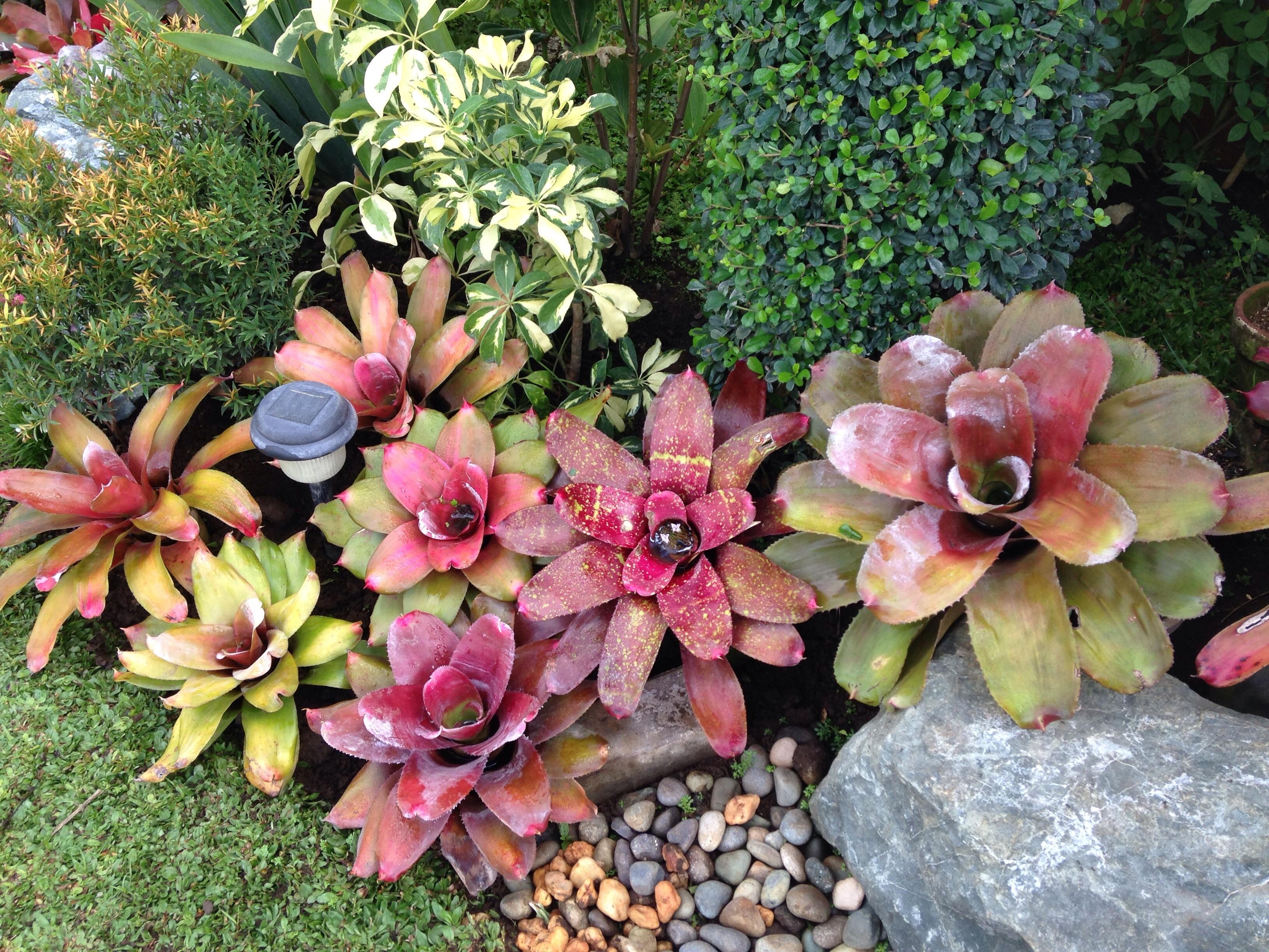 Fotos gratis flor bot nica flora jard n de piedras for Arboles florales para jardin