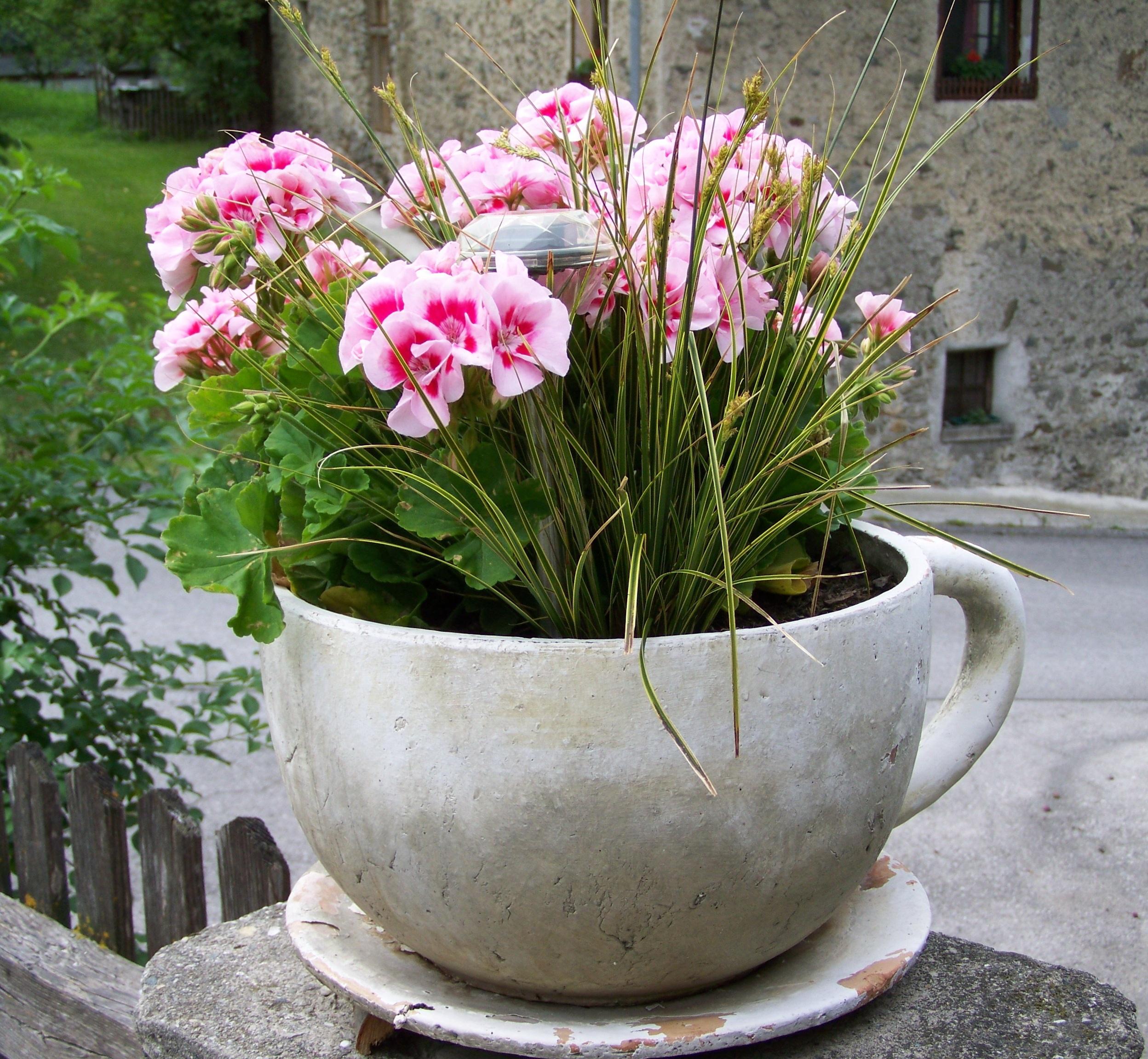 images gratuites botanique jardin flore arbuste pot de fleur cour fleuriste plante. Black Bedroom Furniture Sets. Home Design Ideas