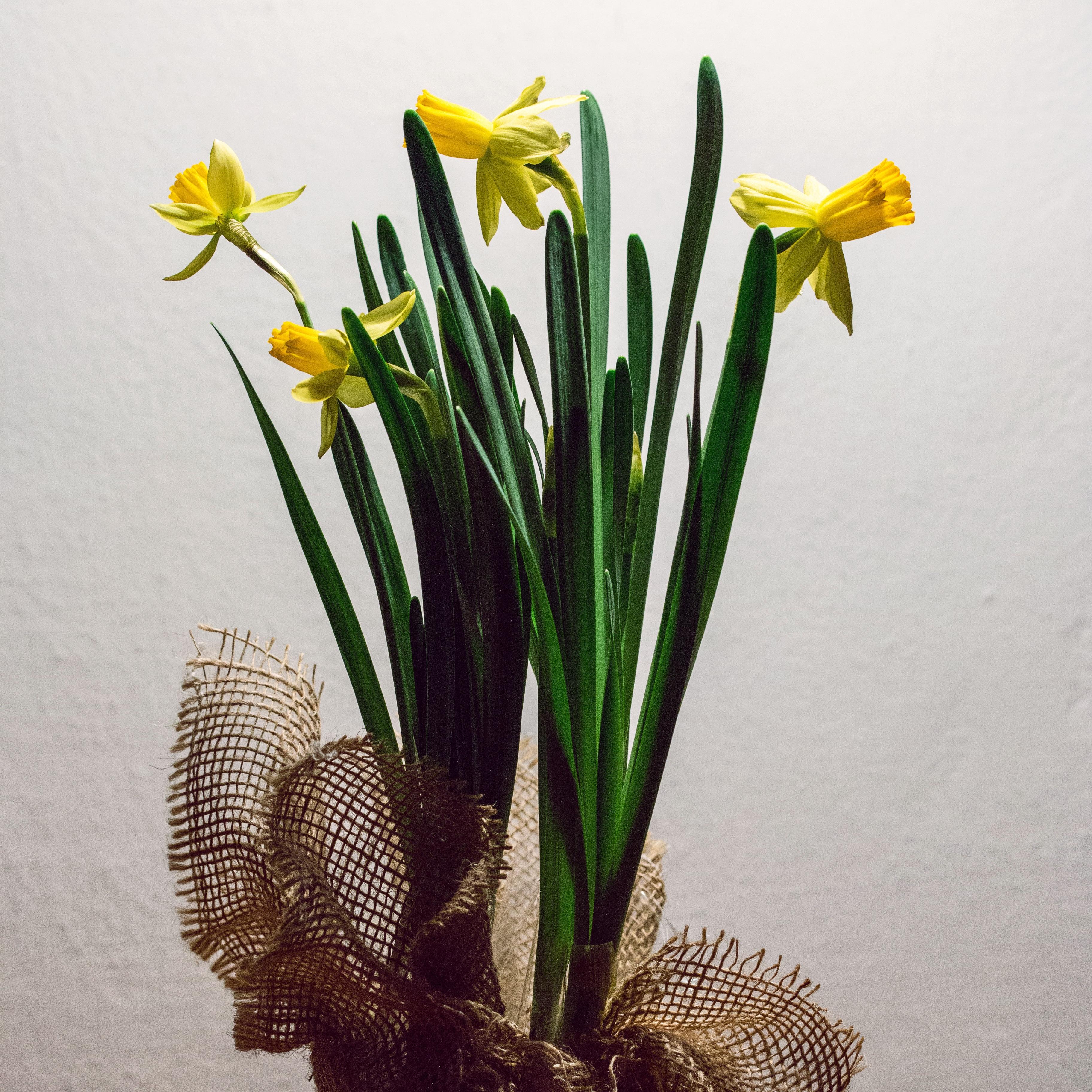Gambar Menanam Botani Kuning Flora Seni Budidaya