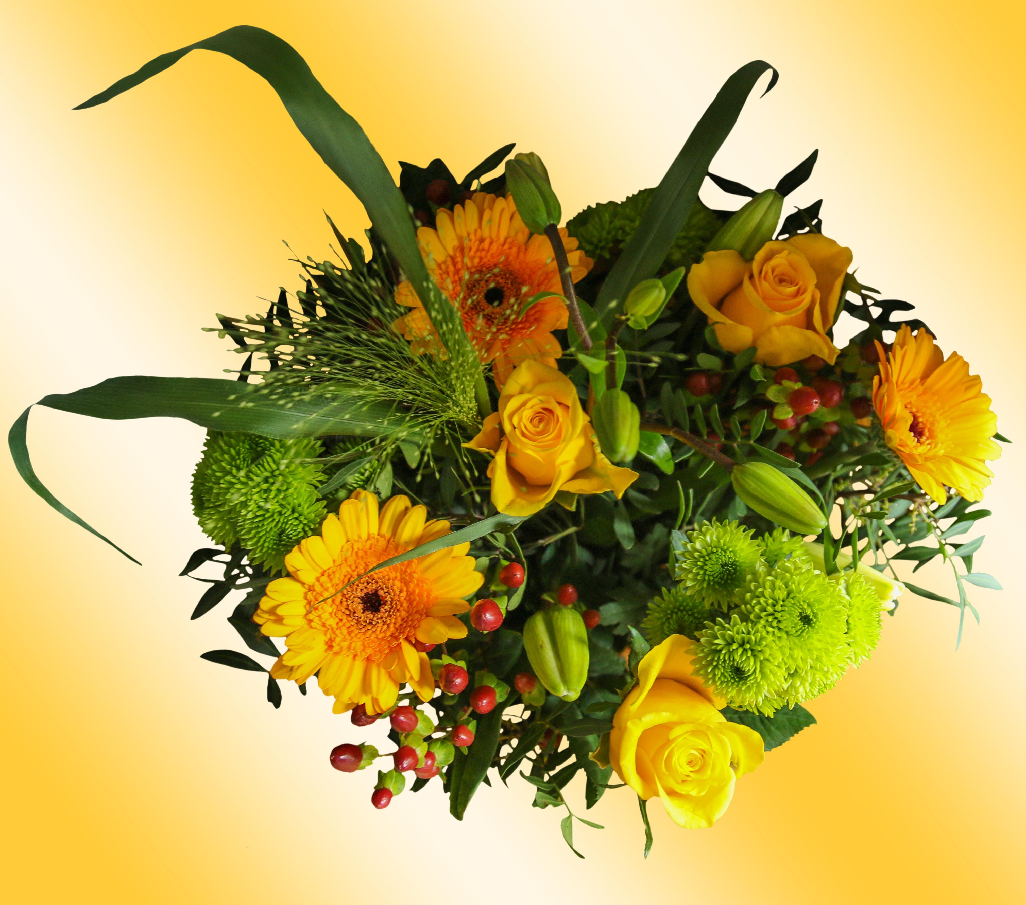 images gratuites : fleur, bleu, jaune, fermer, flore, ouvrages d