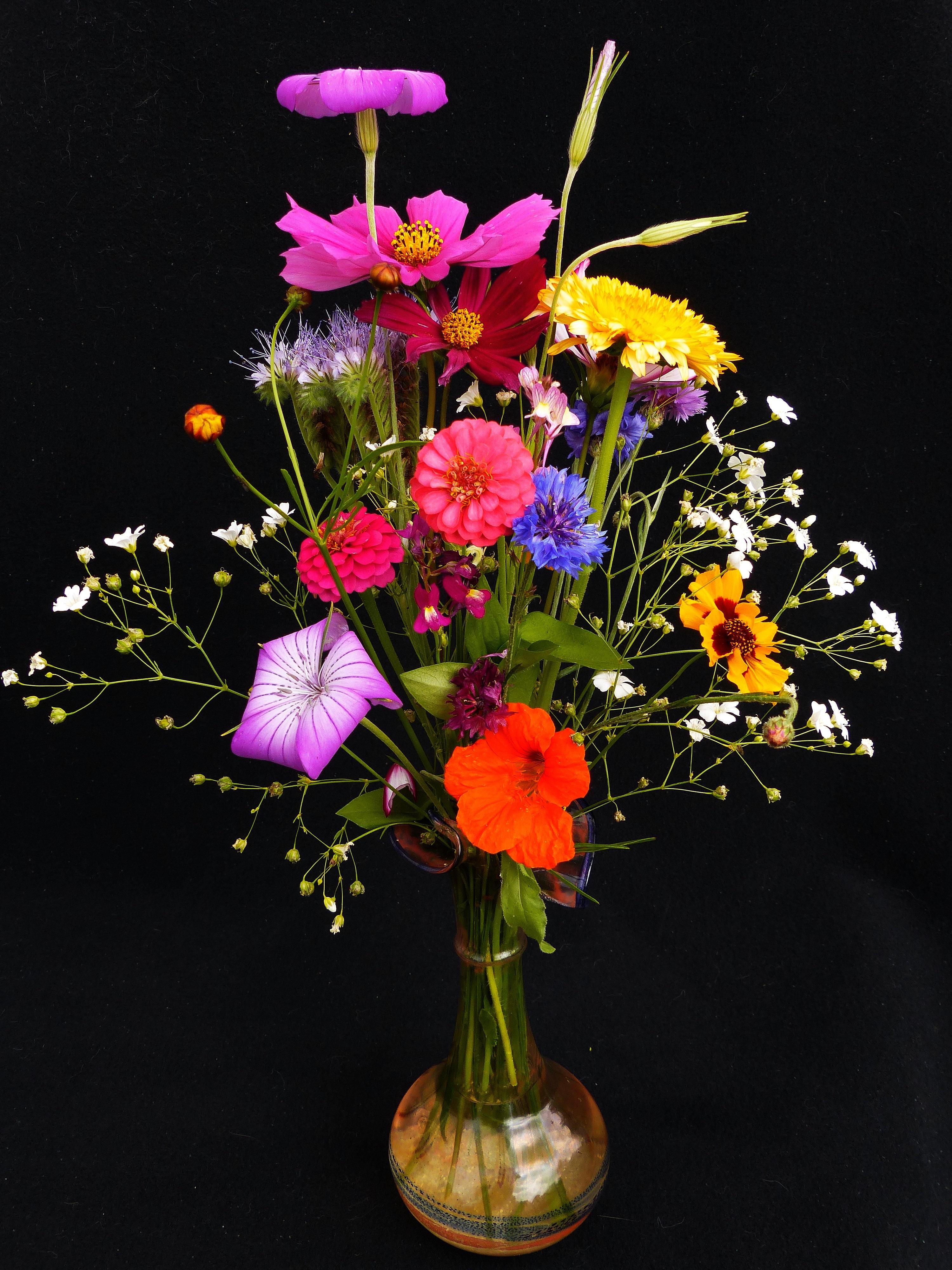Fotoğraf çiçek Renk Renkli Bitki örtüsü Resim Boyama
