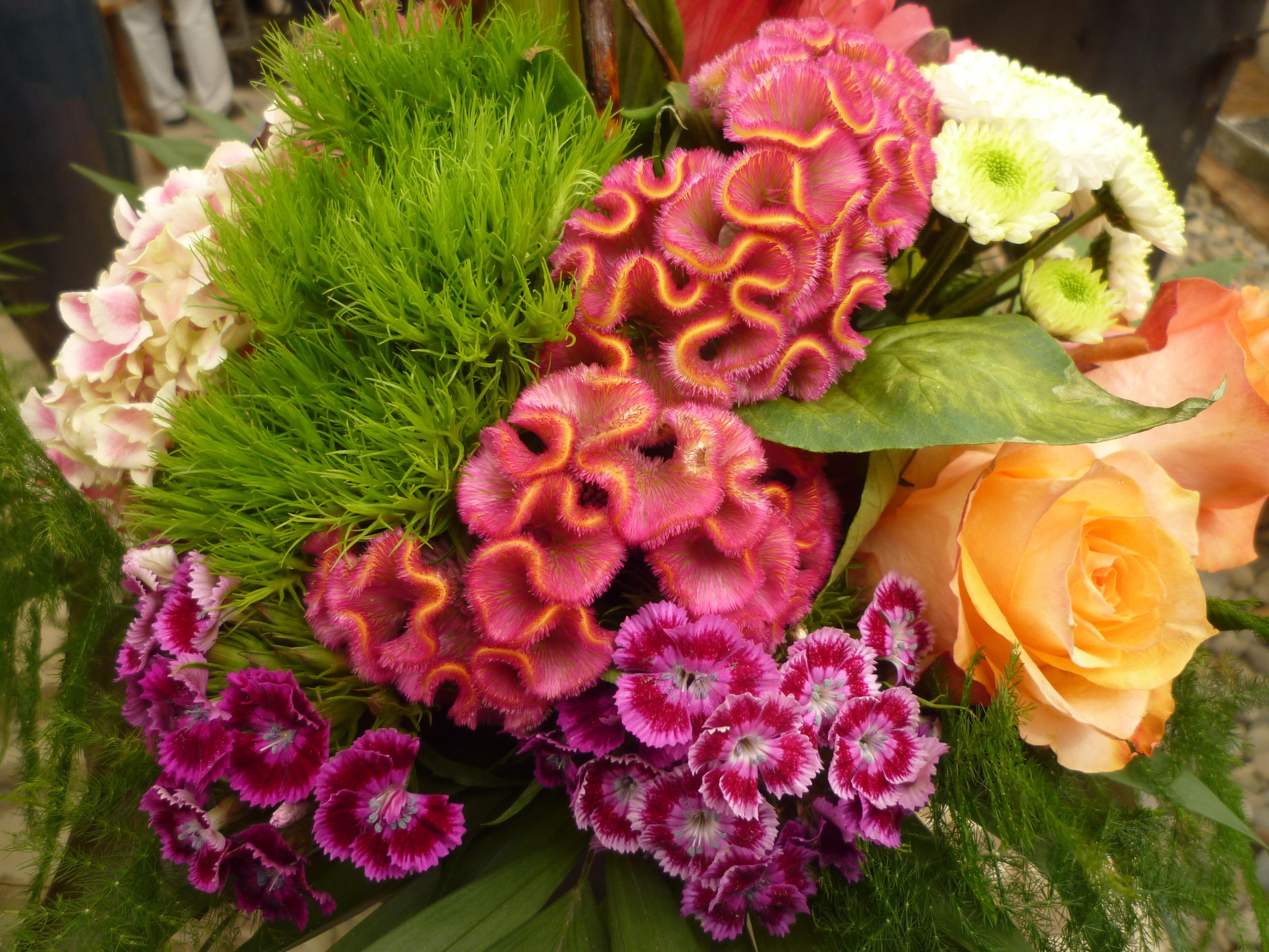 Free Images : colorful, flora, floristry, retail, cloves, floral ...