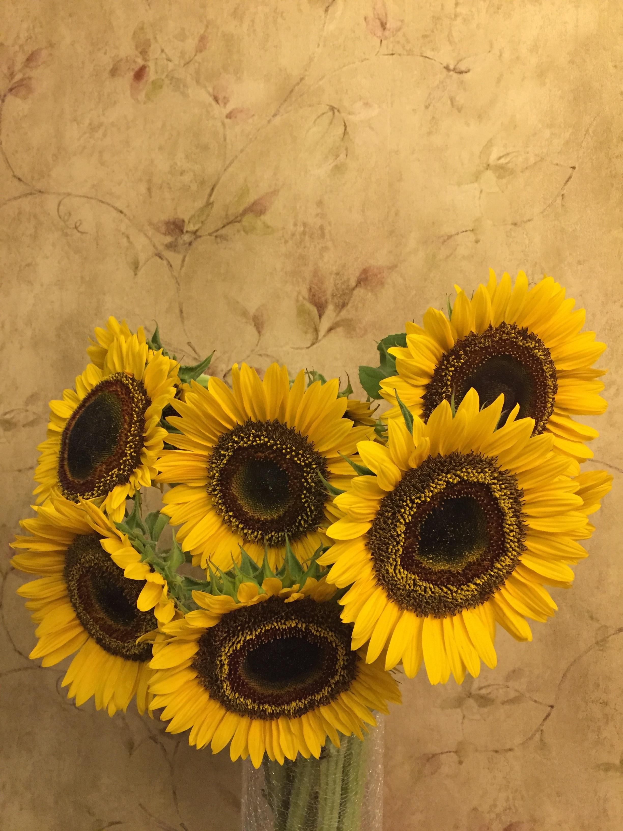 images gratuites : fleur, bouquet, vase, jaune, plante à fleurs
