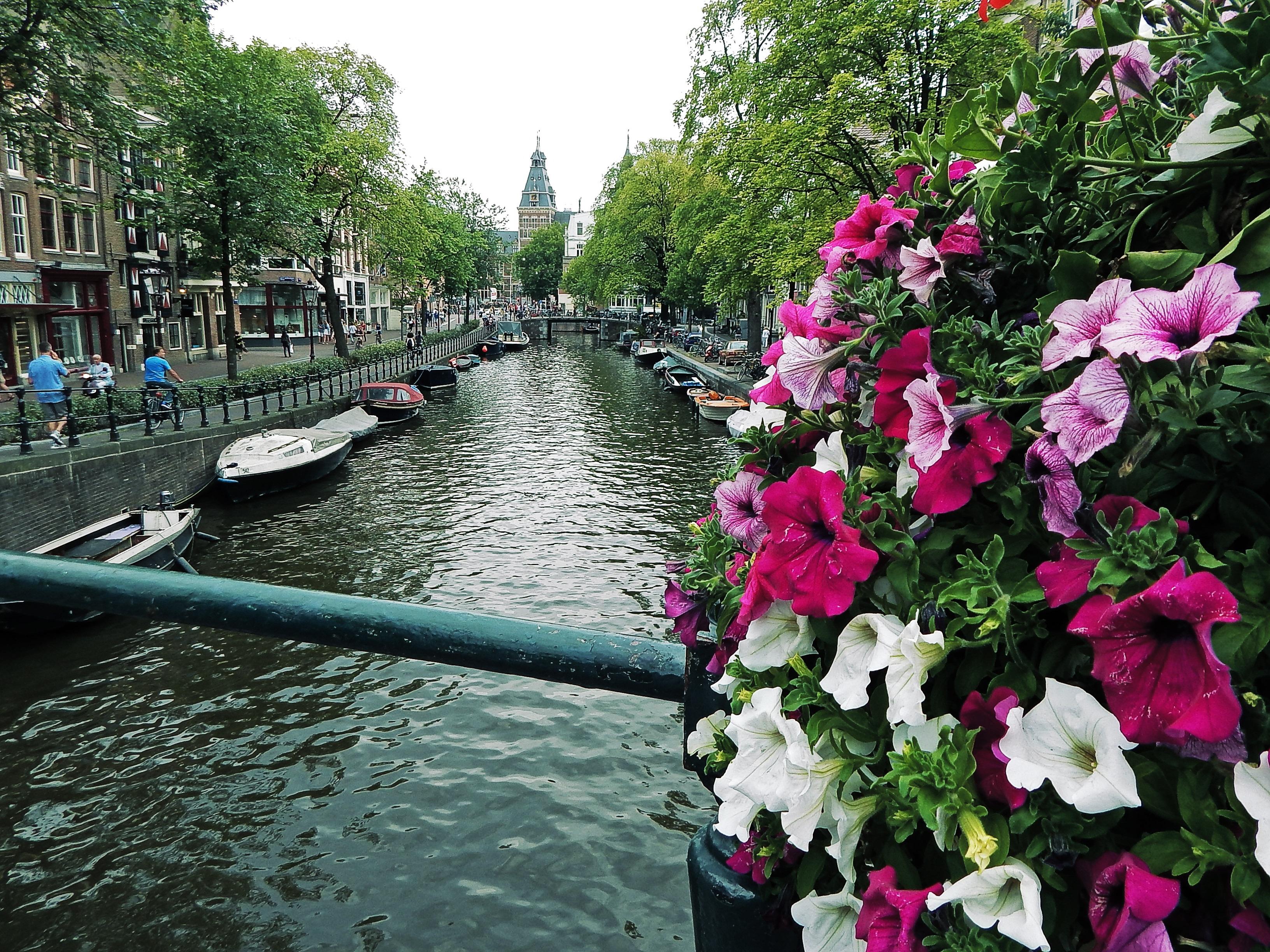 kostenlose foto pflanze blume kanal wasserweg blumen holland amsterdam niederlande. Black Bedroom Furniture Sets. Home Design Ideas