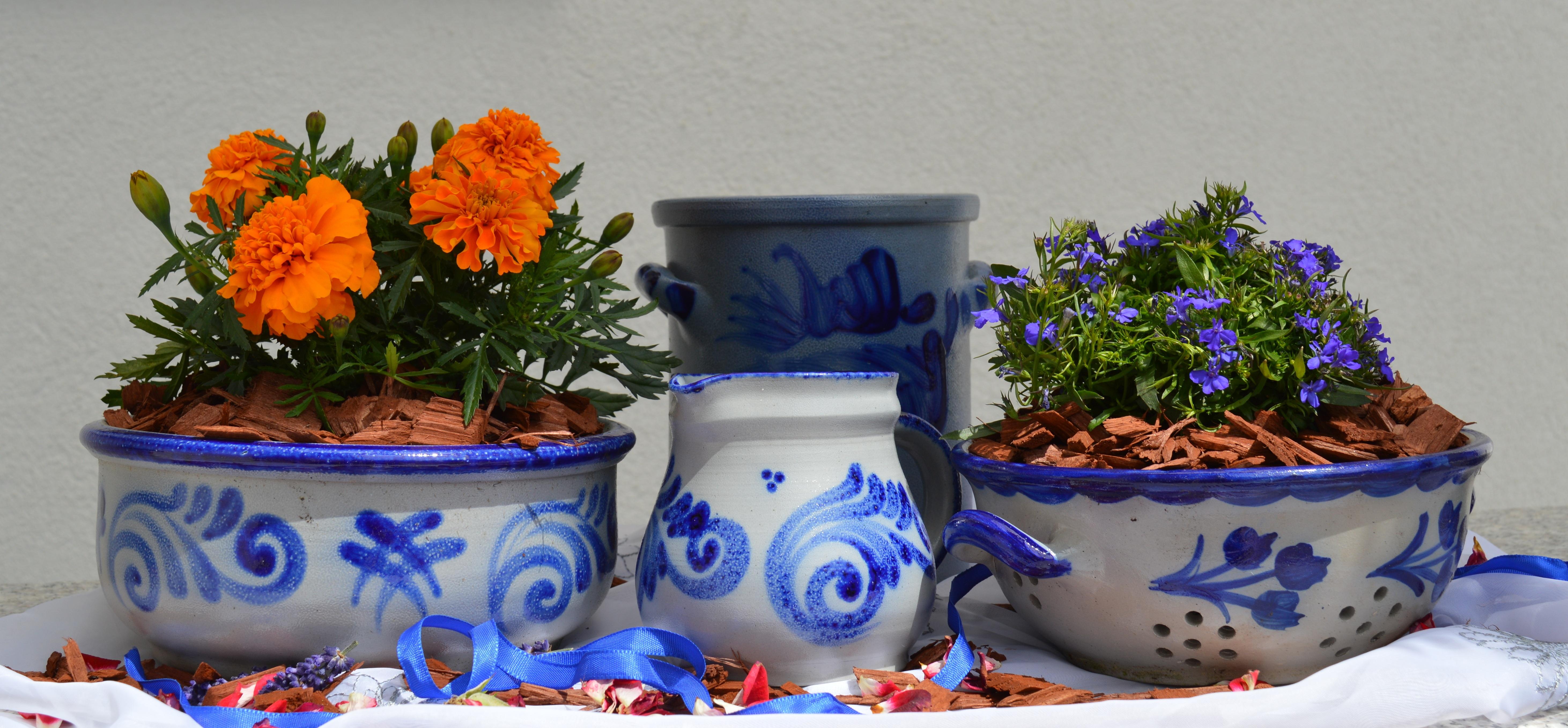 Fantastic Free Images : plant, ceramic, blue, garden, flowers, arrangement  WN85