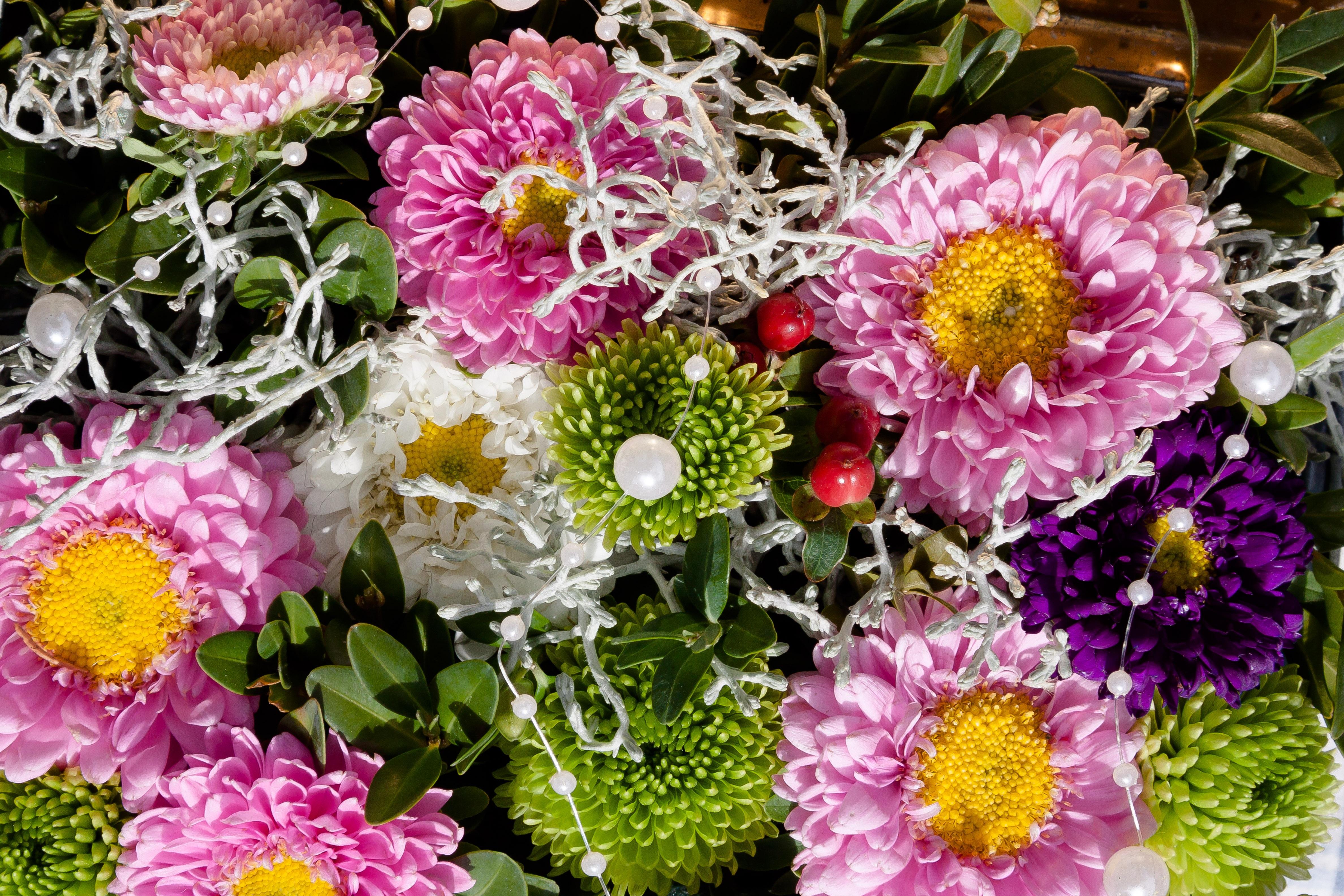 Fotos gratis flor decoraci n verde rosado flora - Cortar hierba alta ...
