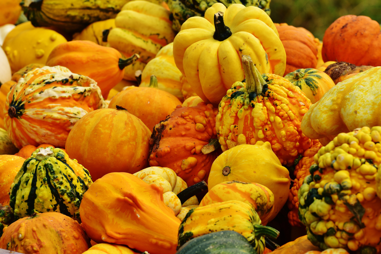 free images flower orange food harvest produce vegetable