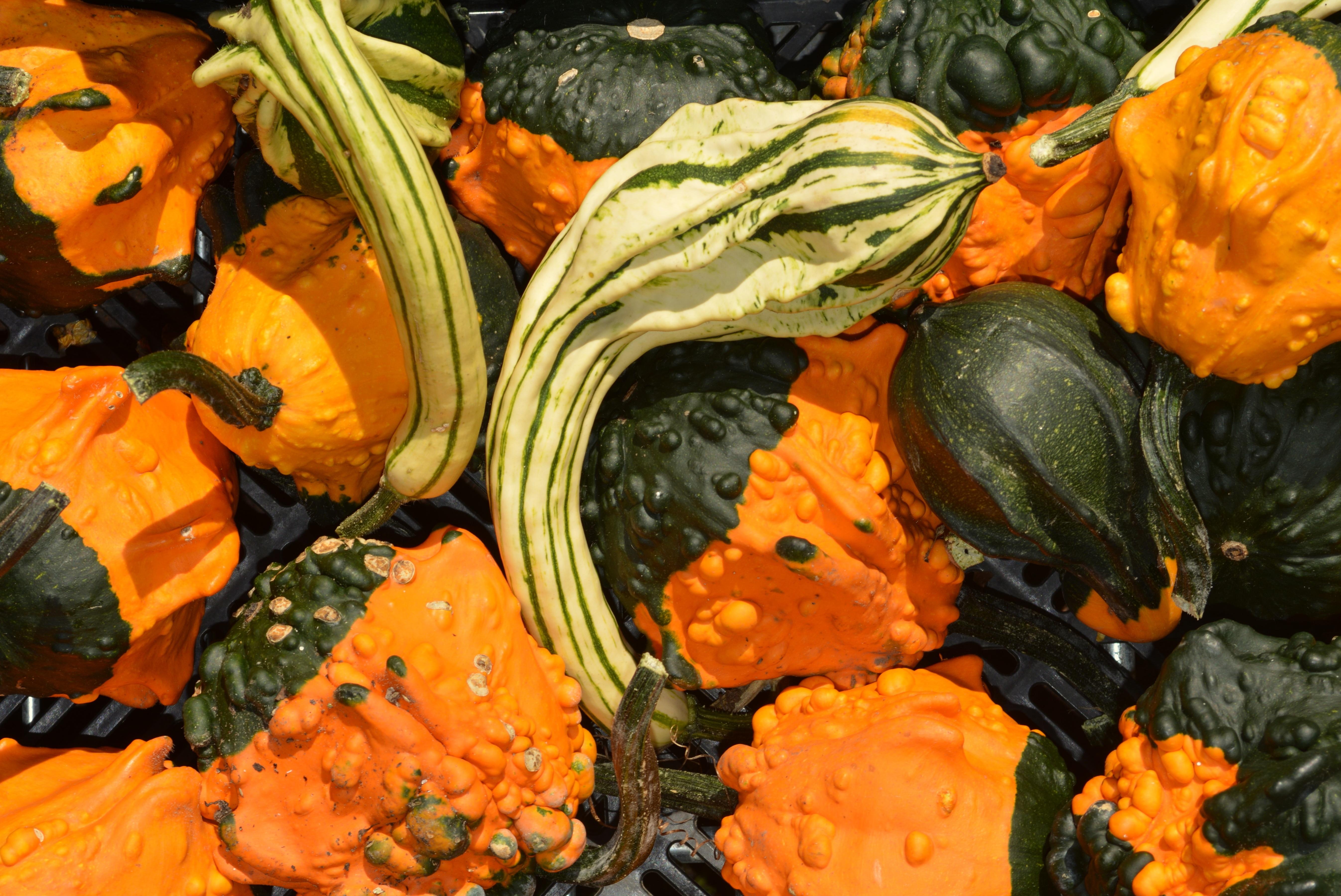 images gratuites fleur d coration orange aliments produire l gume l 39 automne citrouille. Black Bedroom Furniture Sets. Home Design Ideas