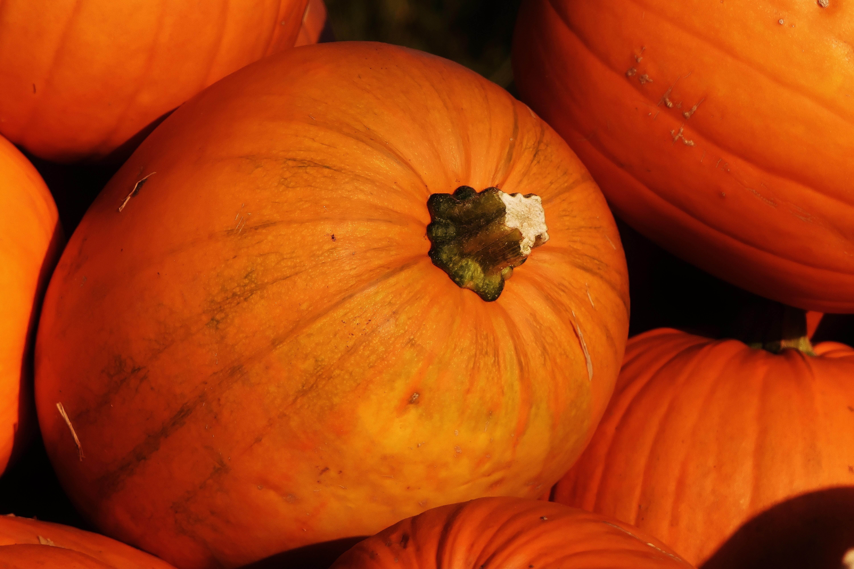 free images plant flower orange harvest produce vegetable