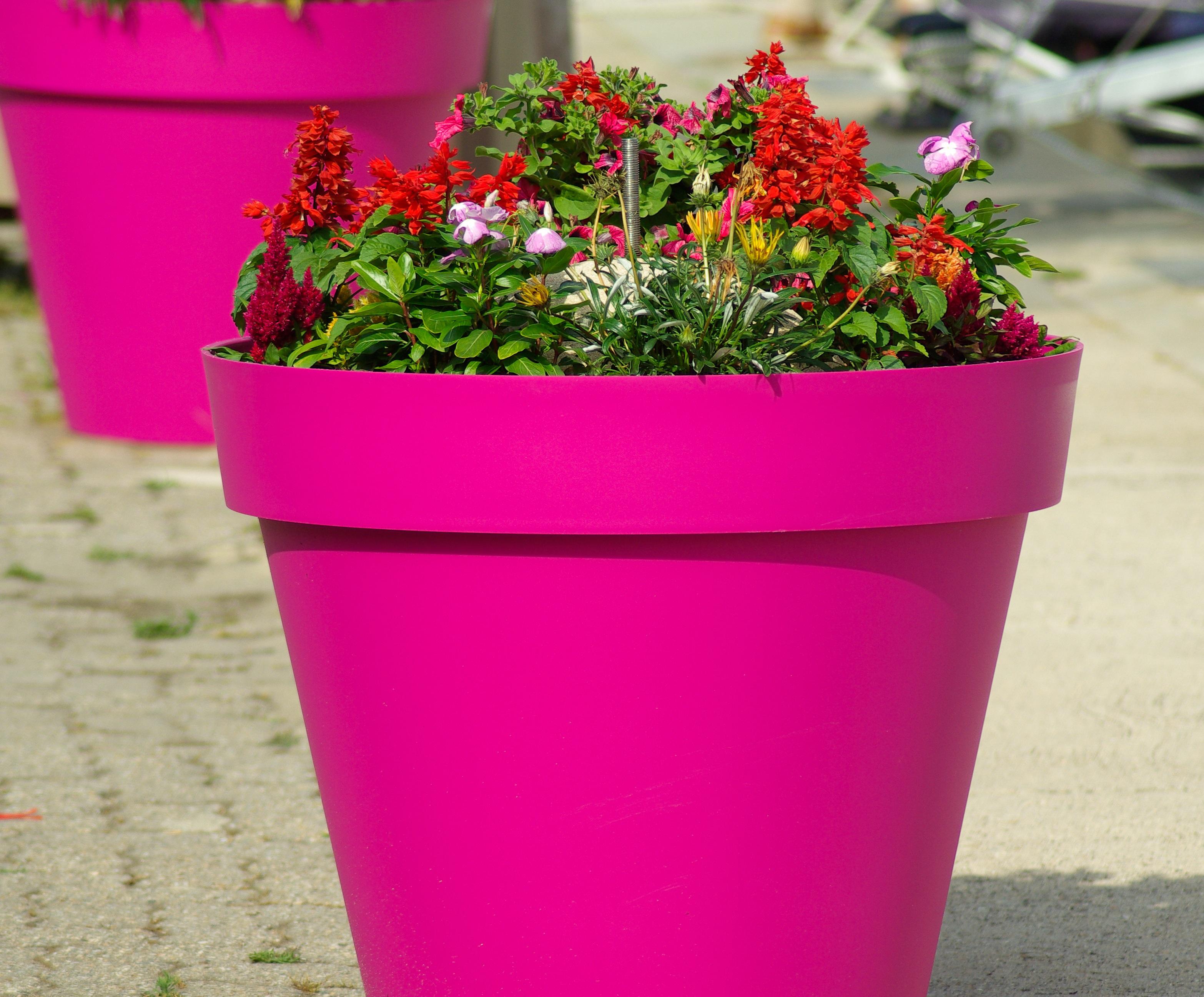 Free Images Plant Decoration Pink Flower Pot Flowerpot