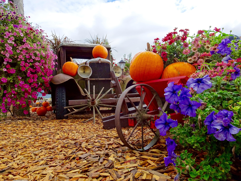 Kostenlose Foto Blume Dekoration Lkw Ernte Produzieren Herbst