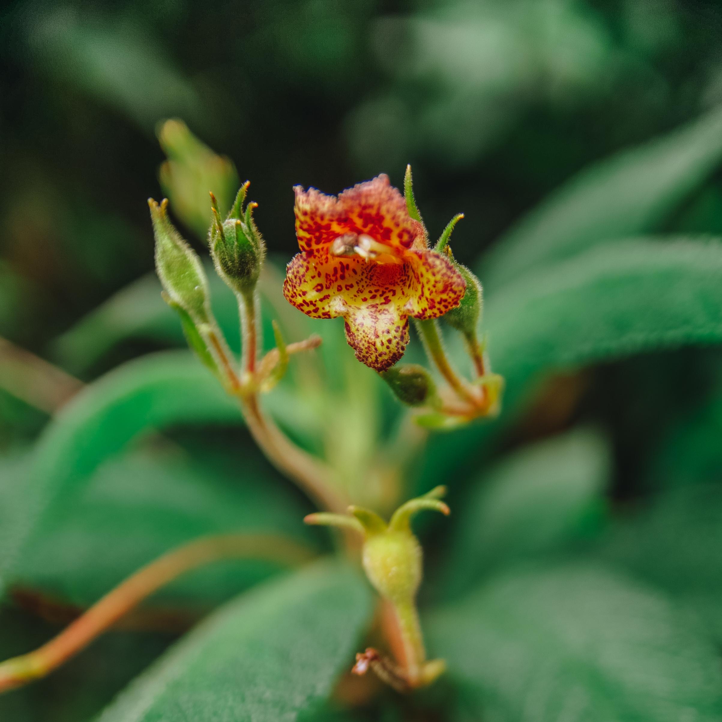 Gambar Menanam Bunga Flora Tumbuh Tumbuhan Fotografi Makro
