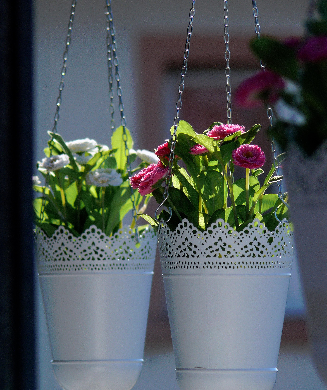 Plante Panier Suspendu : Images gratuites plante vase couleur jardin flore