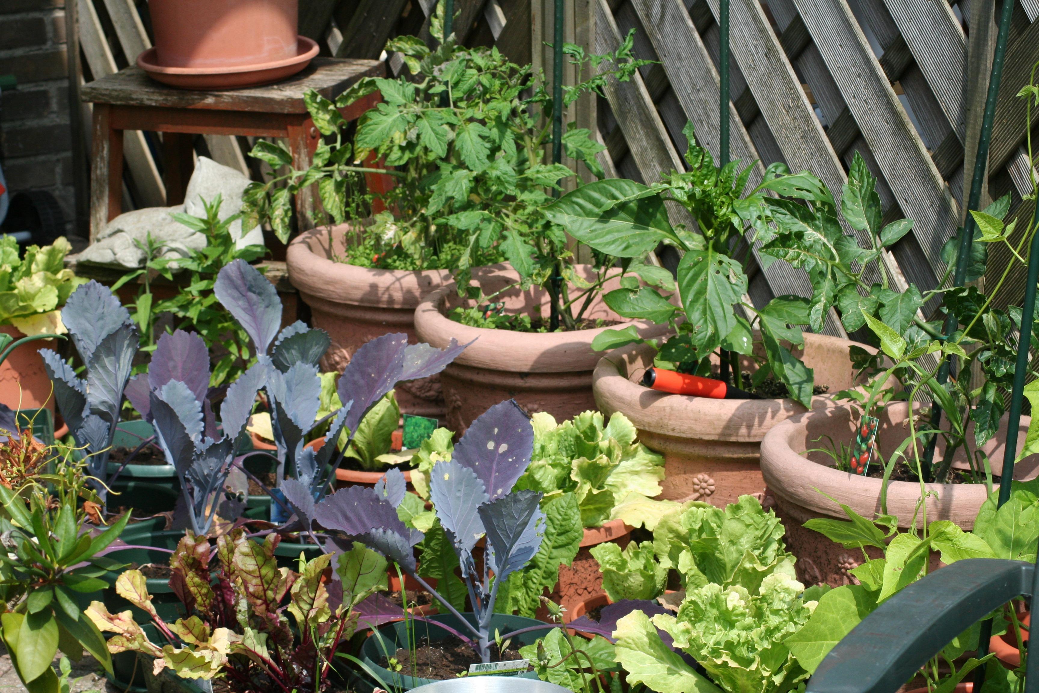 8bf347167 rastlina kvetina jedlo bylina vyrobiť zadný dvorček záhradný yard kuchynská  záhrada vlastnej kultivácie outdoor štruktúra