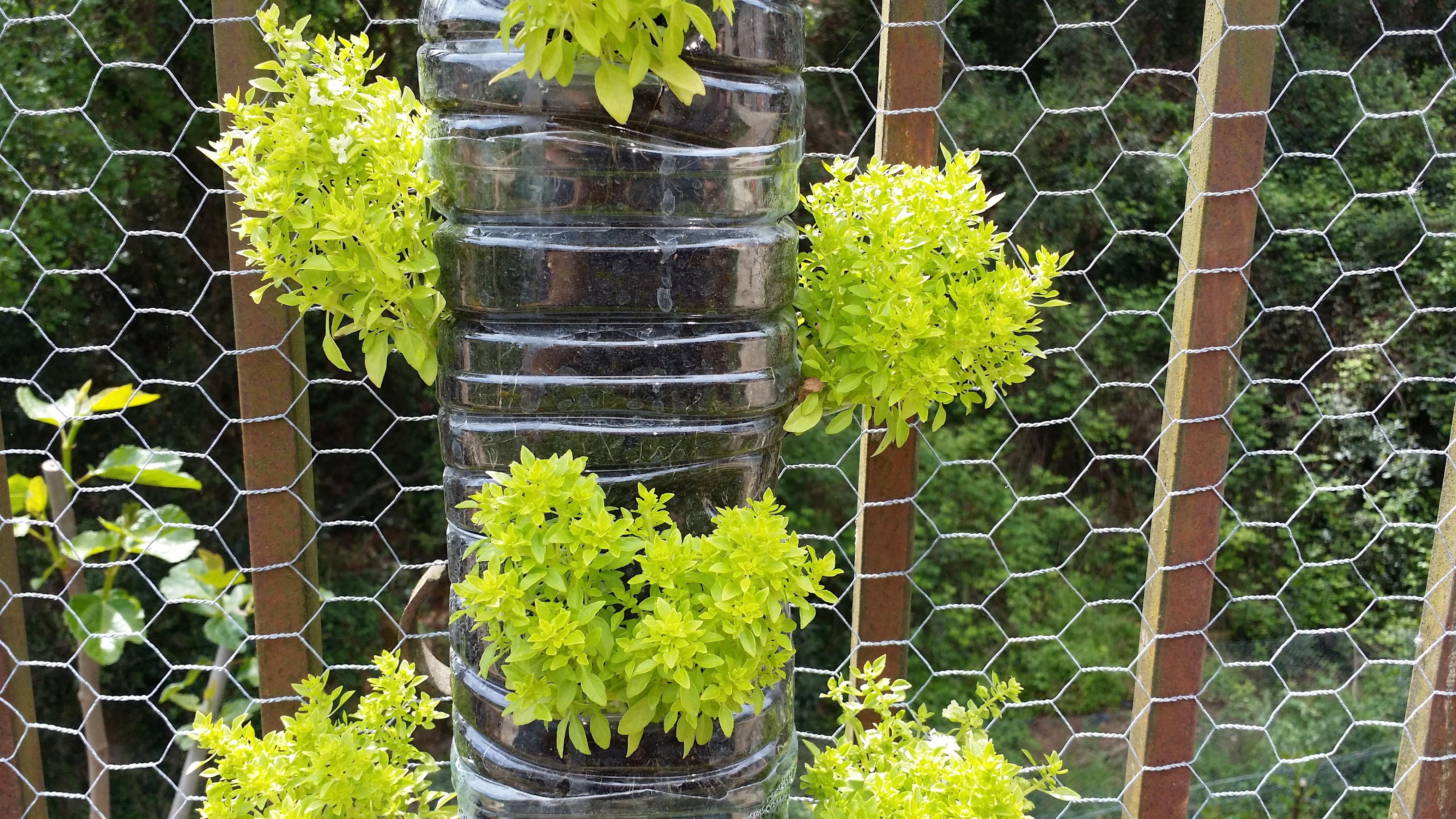 Gambar Menanam Bunga Makanan Menghasilkan Botani Taman Belukar Halaman Vertical Garden Tanaman Berbunga Tanaman Tahunan Albahabaca Daun Besar Kemangi Tanaman Tanah Struktur Luar Ruangan 4128x2322 717165 Galeri Foto Pxhere