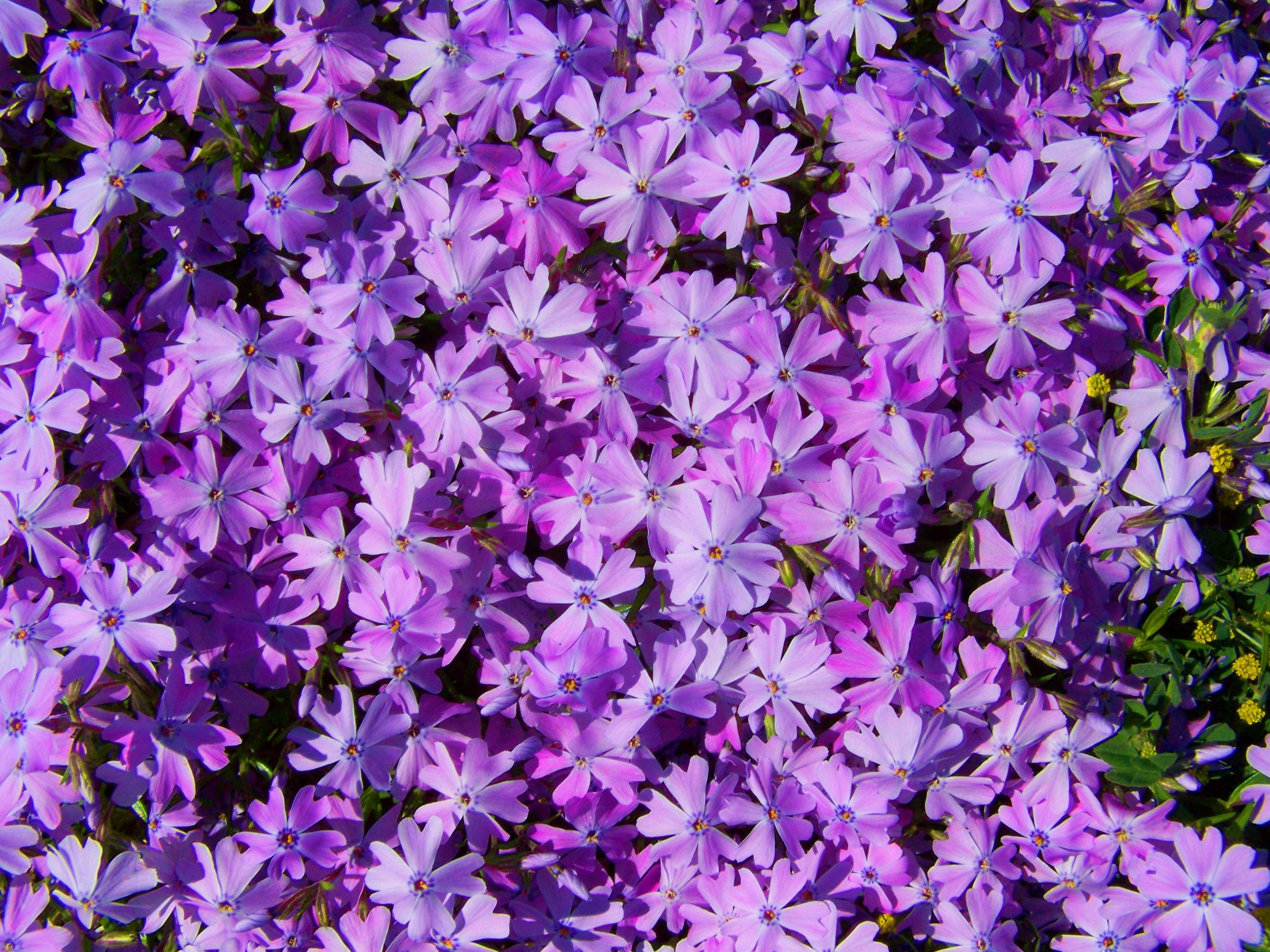 Free Images Garden Flora Wildflower Spring Flower Flowering
