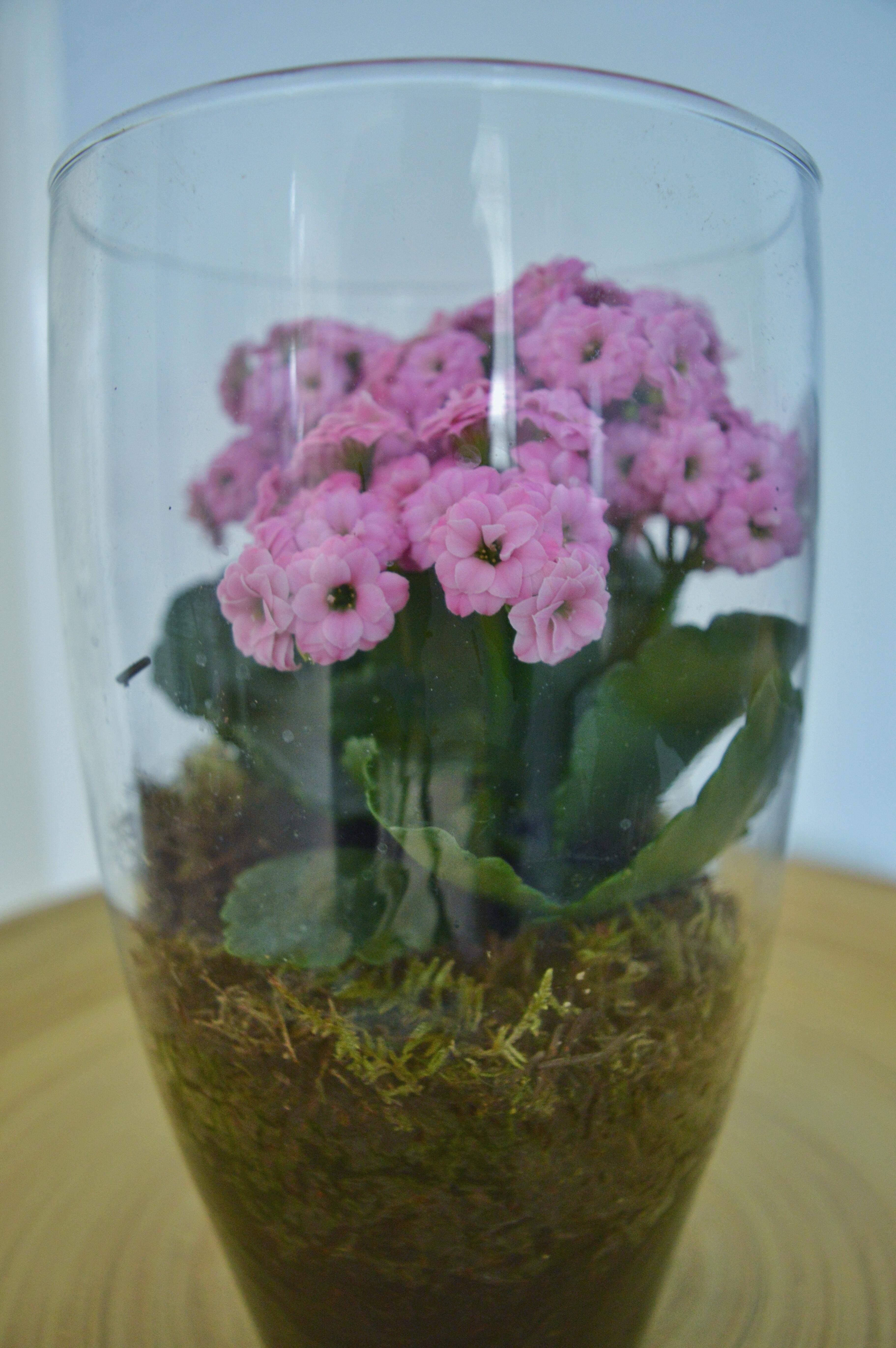 vase lighting. Plant Flower Glass Vase Lighting Flowerpot Floristry Hyacinth Flowering Floral Design Centrepiece Land L
