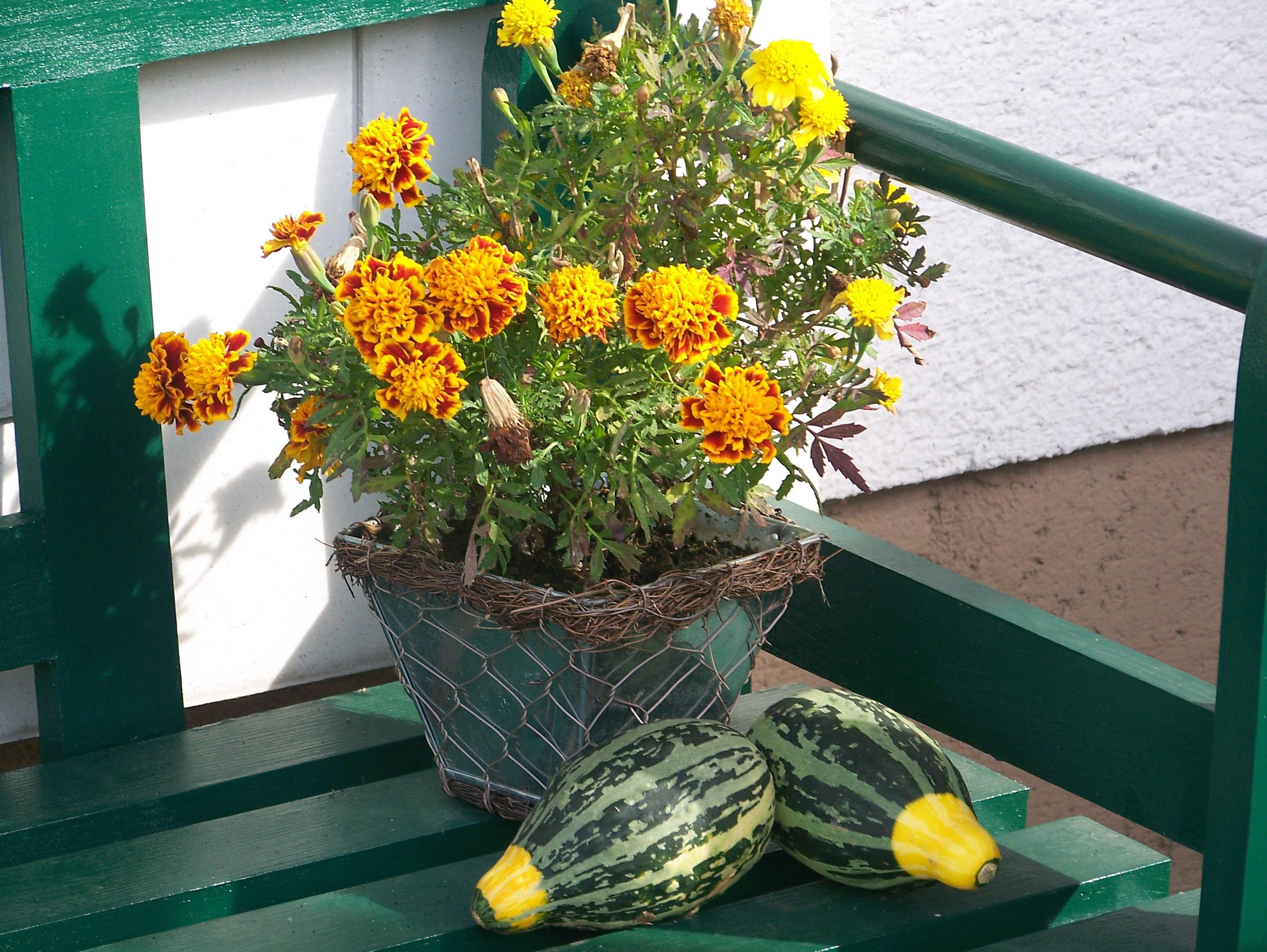 kostenlose foto pflanze blume gr n herbst botanik sich ausruhen gelb garten flora. Black Bedroom Furniture Sets. Home Design Ideas