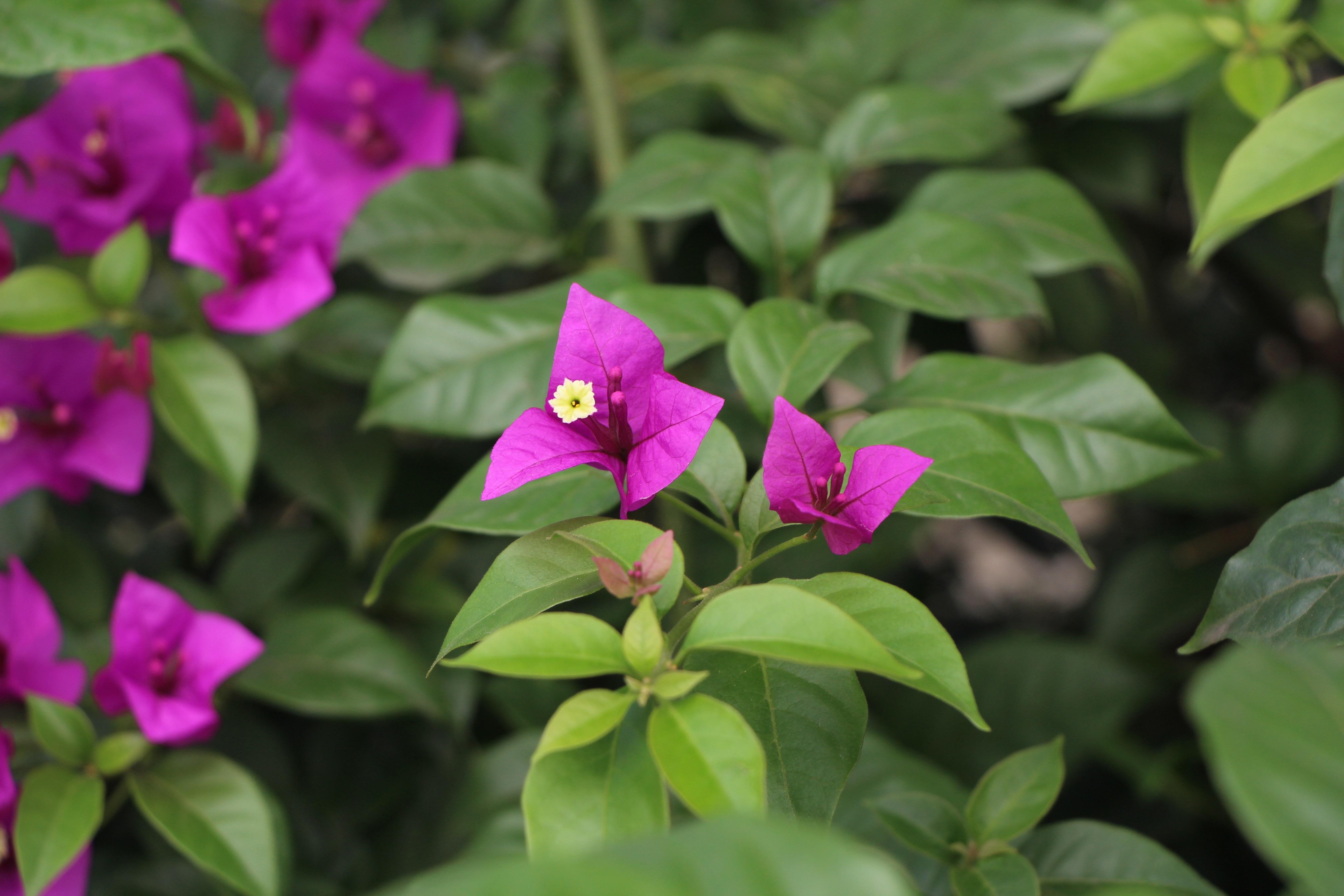 Images gratuites fleur vert botanique flore fleur for Plante arbuste