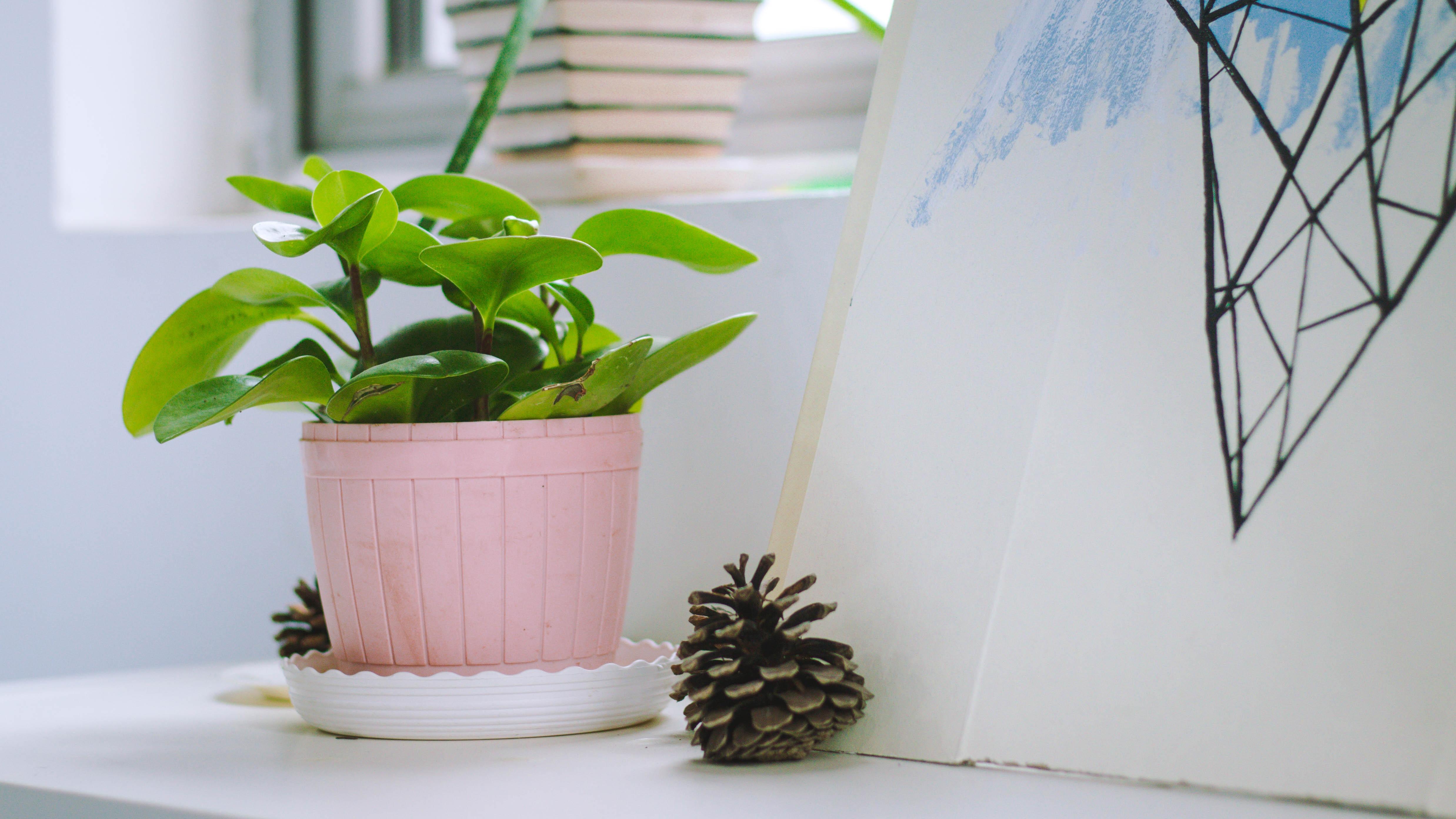 Free images plant flower green desktop indoor for Indoor flower design