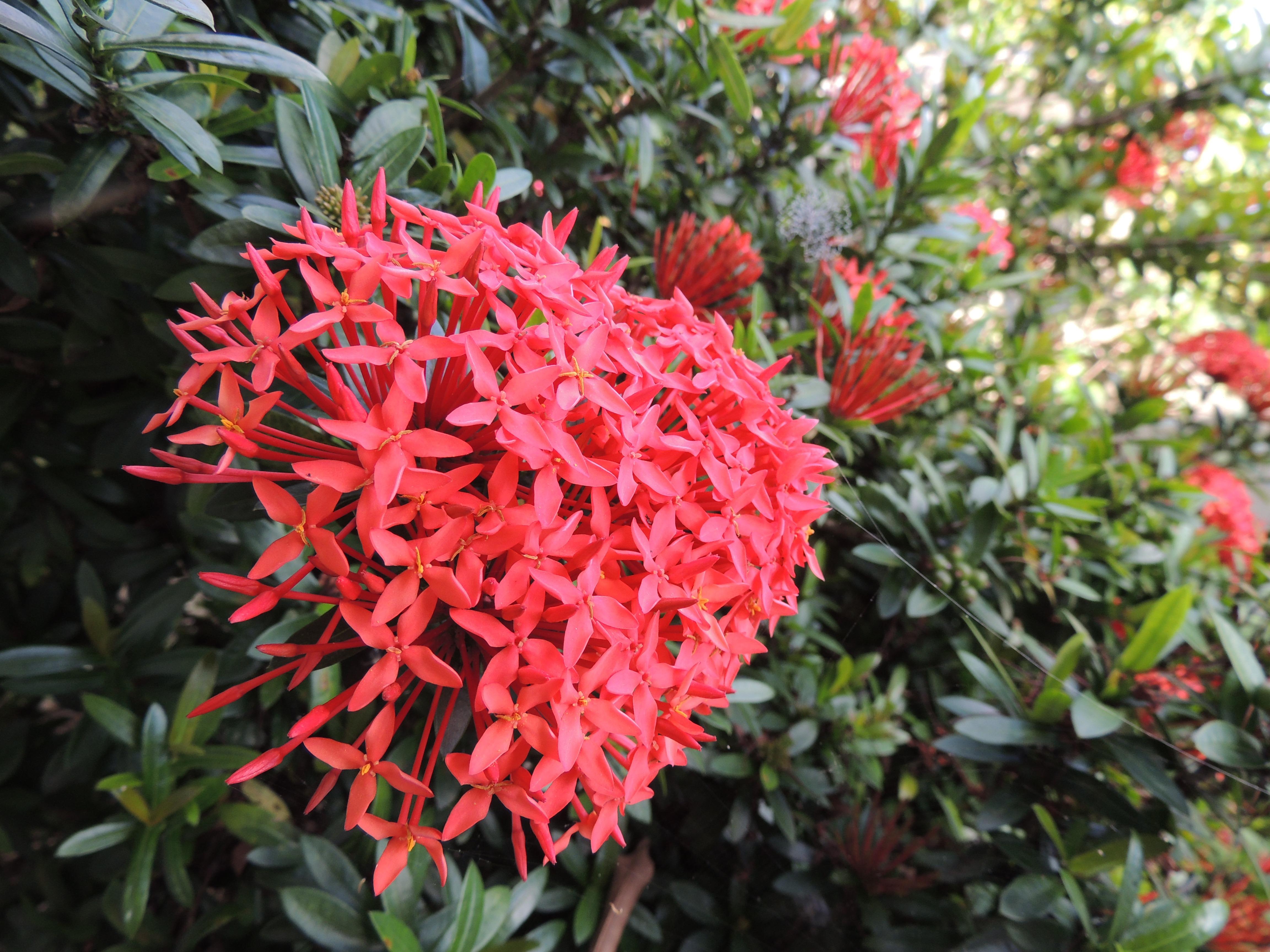 Arbustos perennes con flor arbustos perennes con flor - Arbustos perennes con flor ...